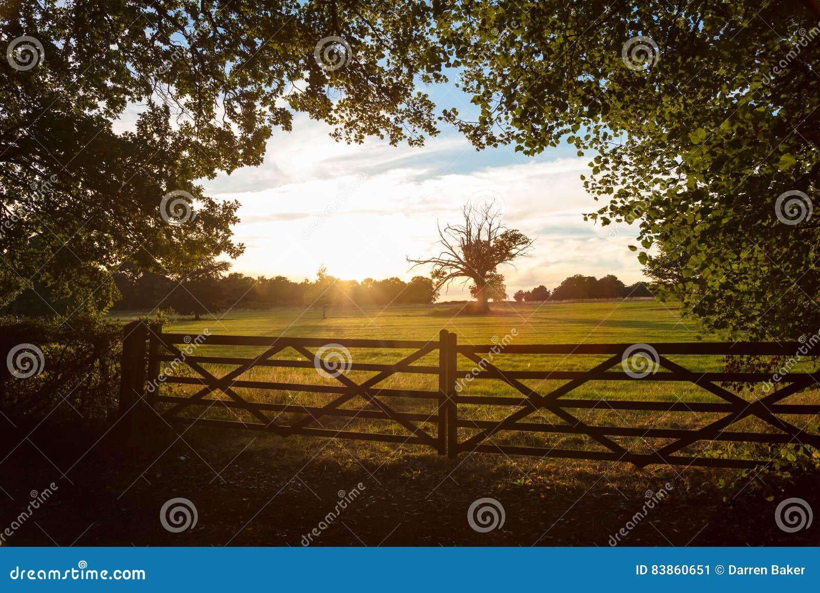 De Poort En De Bomen Van Het Land In Engels Platteland In