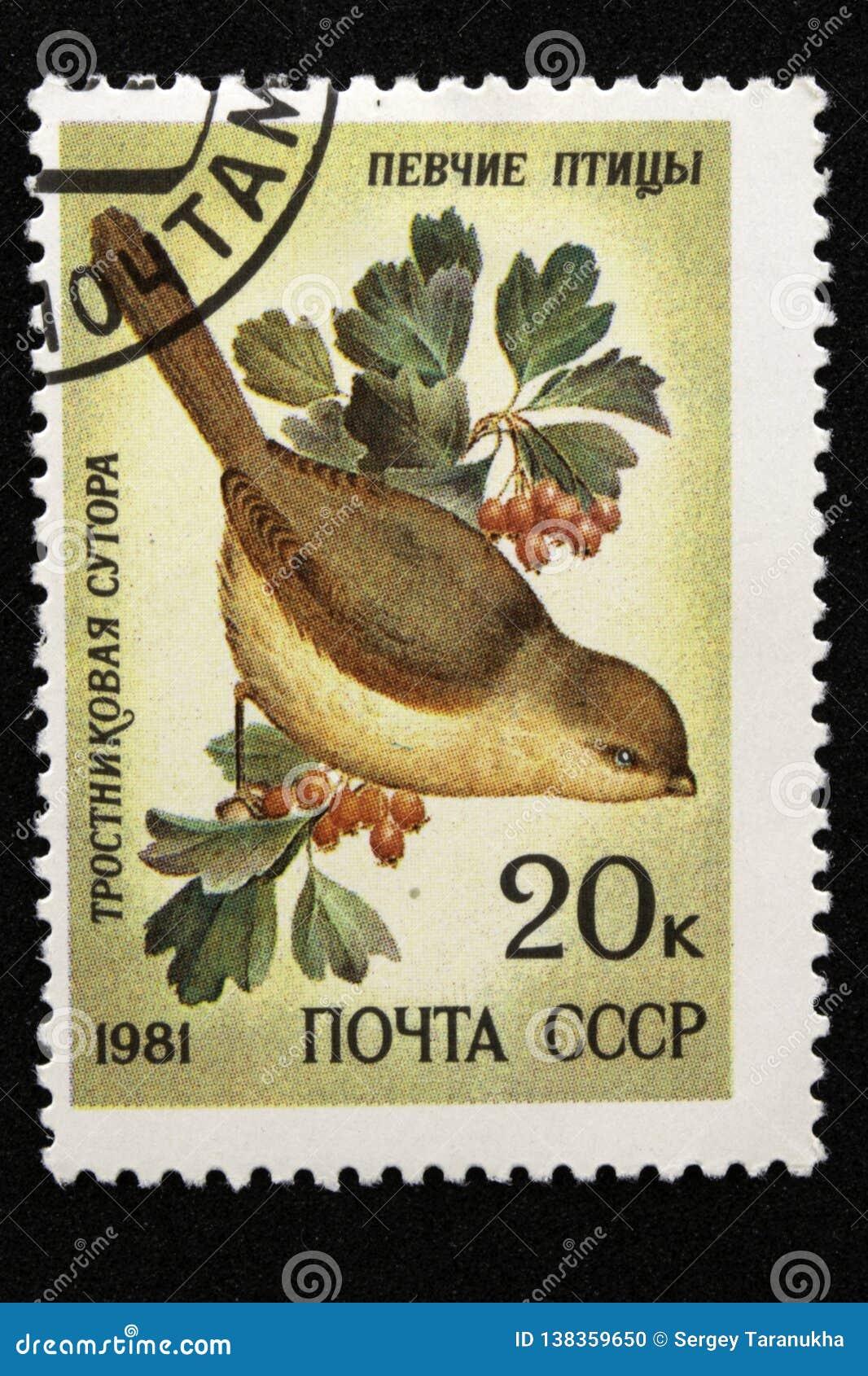 De postzegel van de USSR, reeks - Zangvogels, 1981