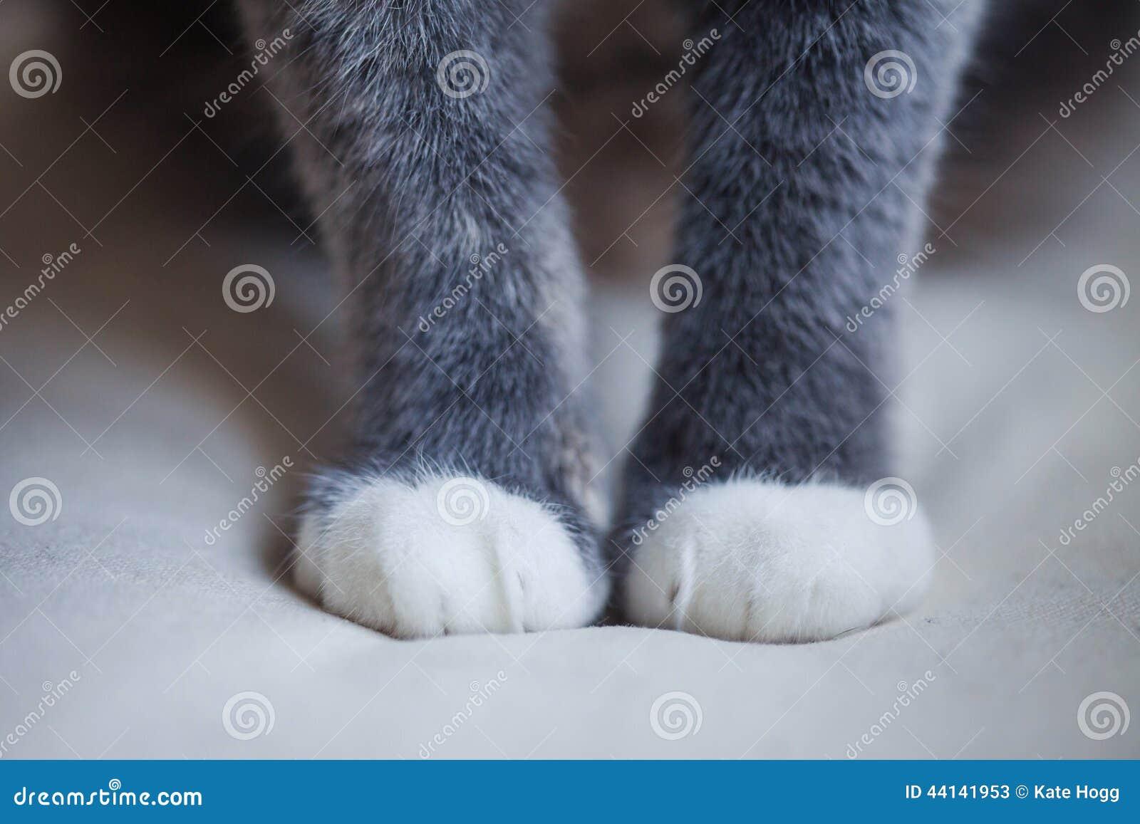De Poten van de kat