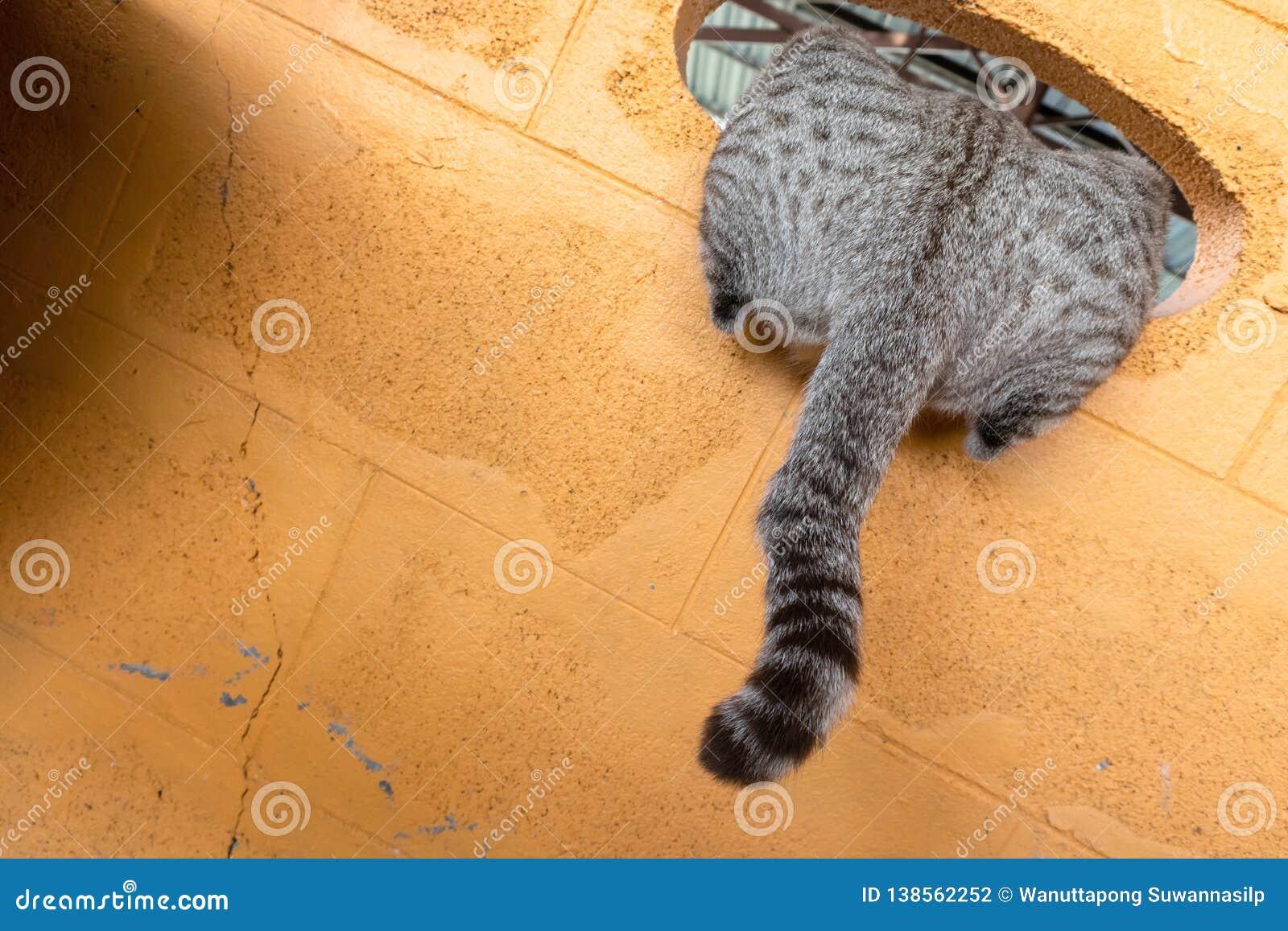 De pothuisdier van het kattenkatje