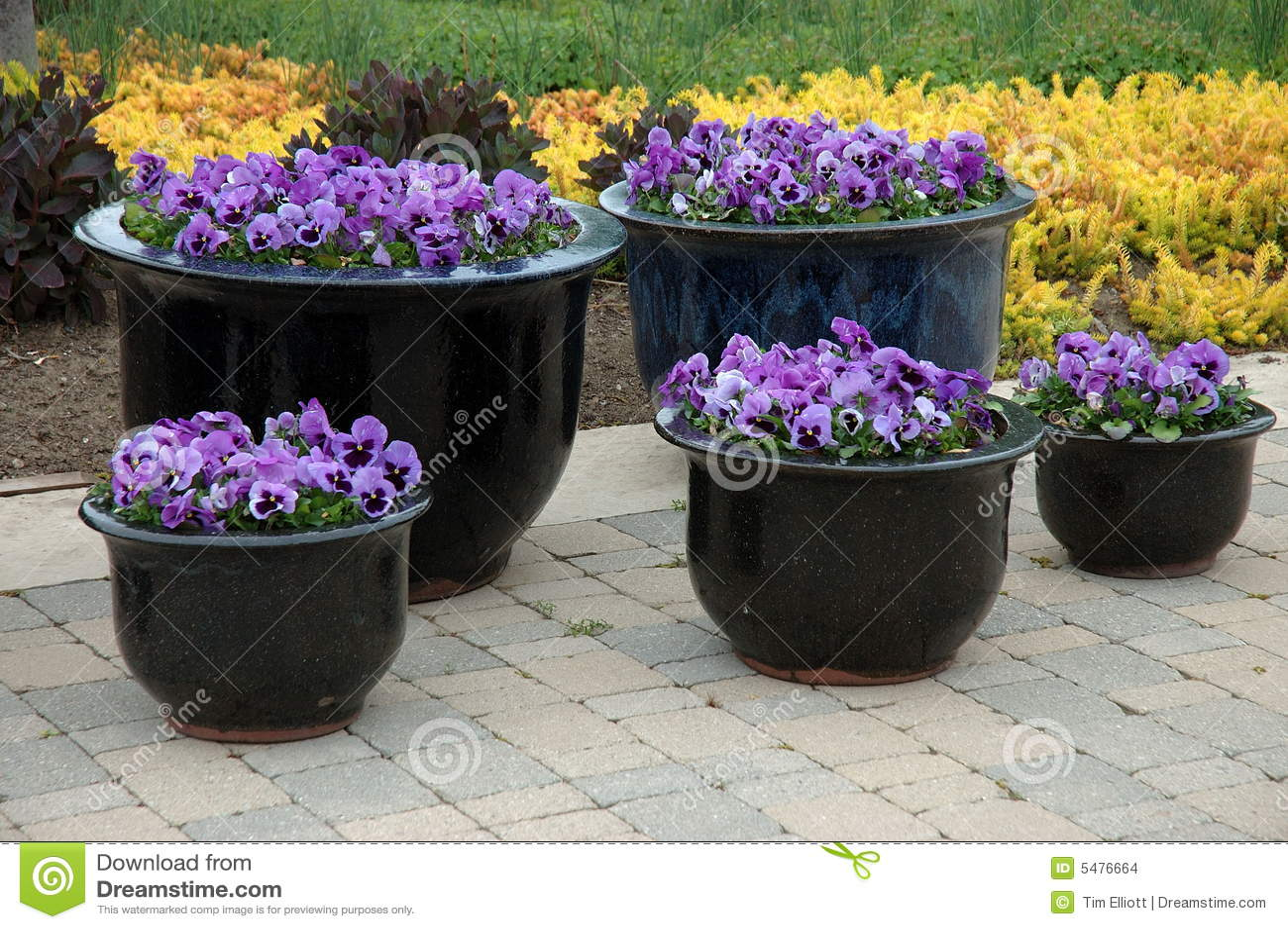 De Potten van de bloem