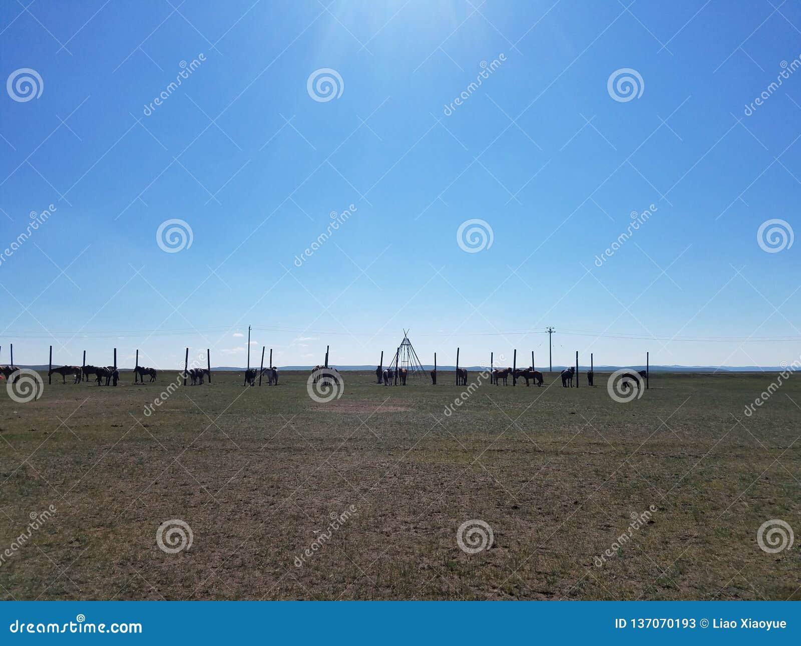 De Prairie van Hulunbuir