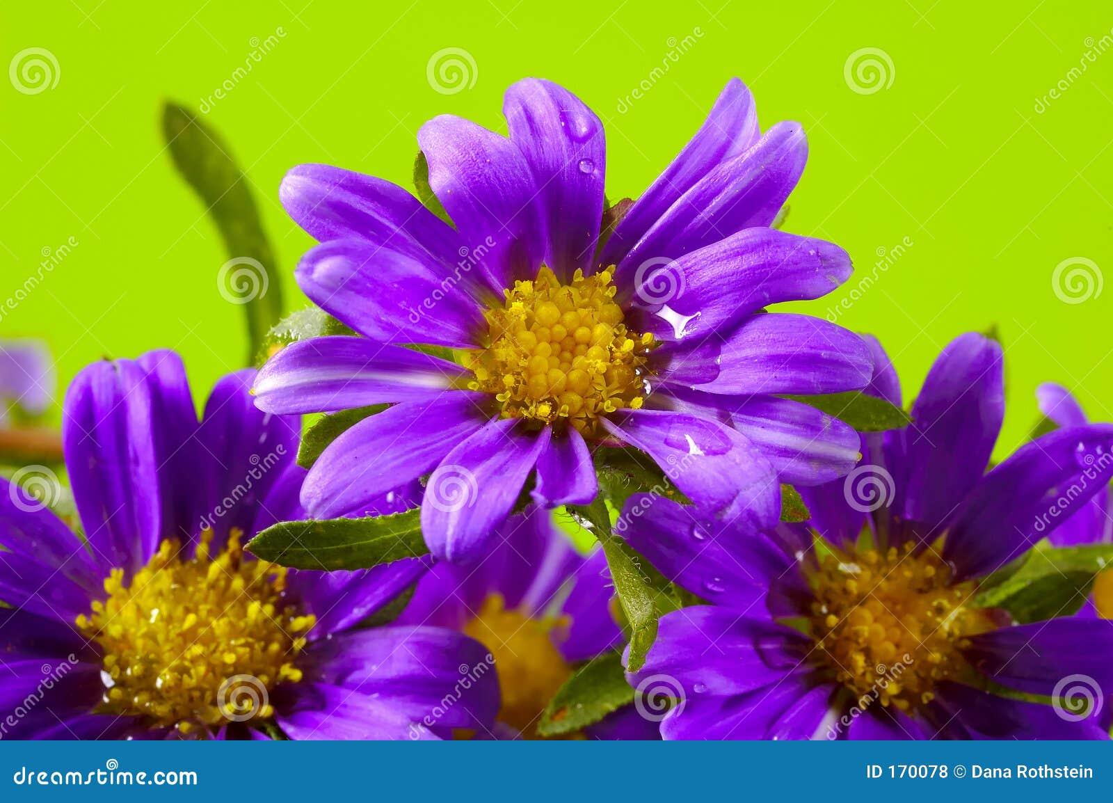 De prentbriefkaar van de bloem