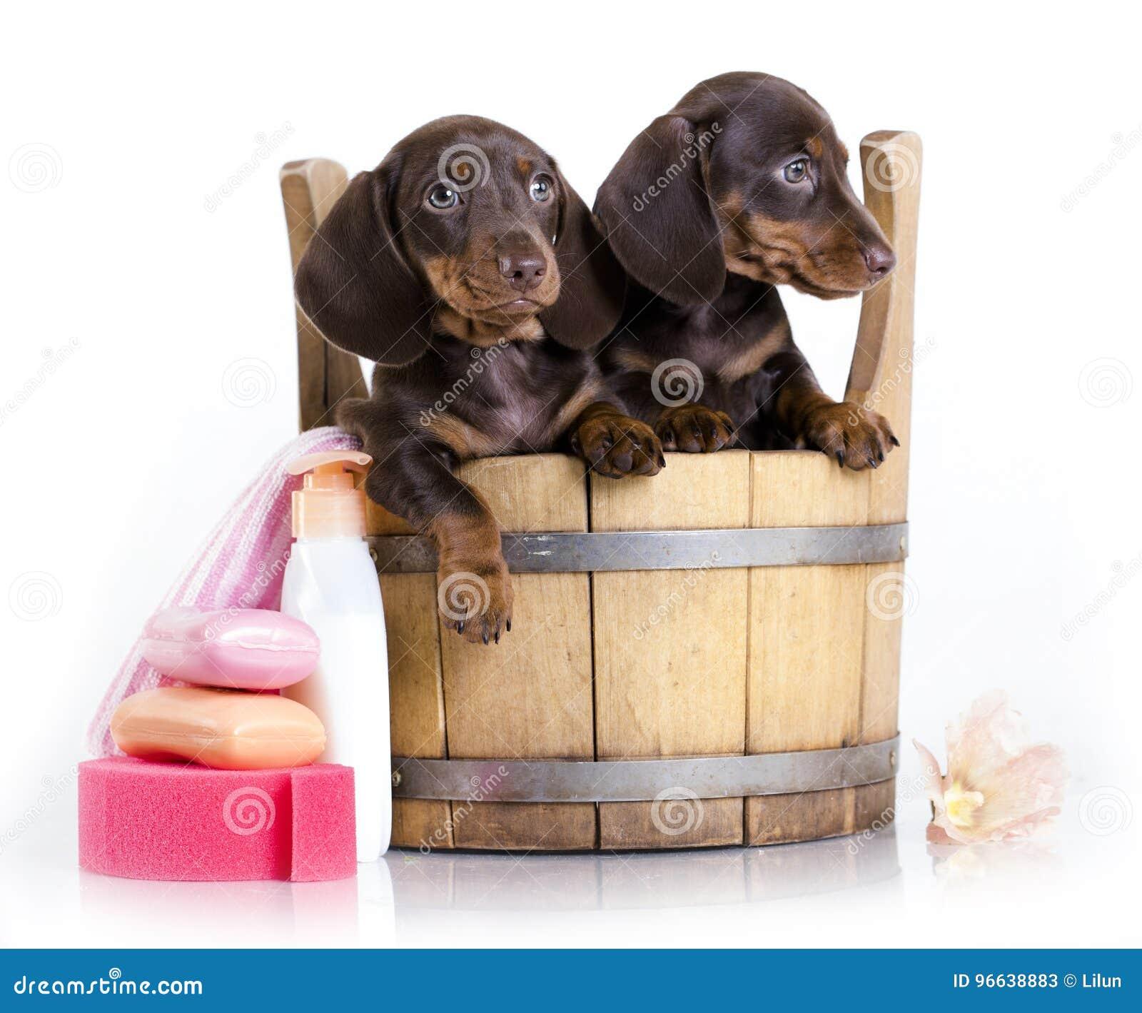 De puppy van de tekkelwas in een ton, het verzorgen
