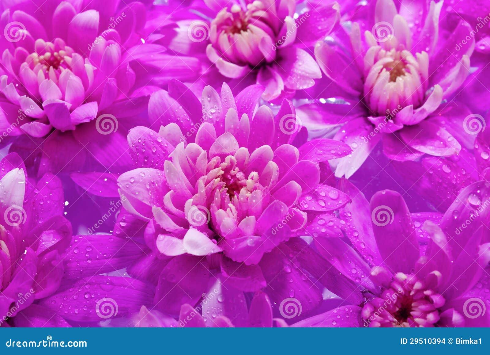 De Purpere Bloemen die van Beautuful in het water floting