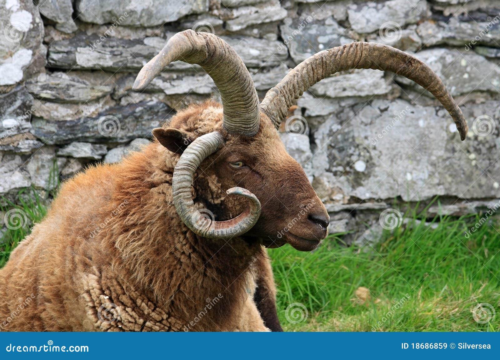 De Ram van Loaghtan