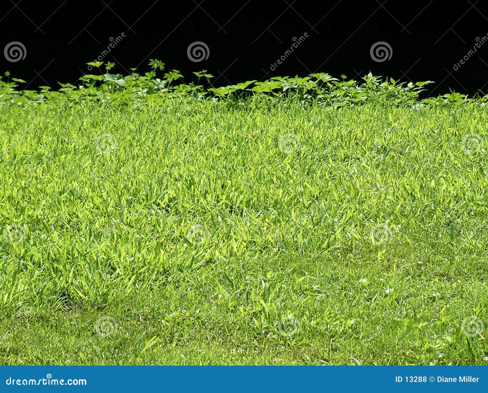 De rand van het gras