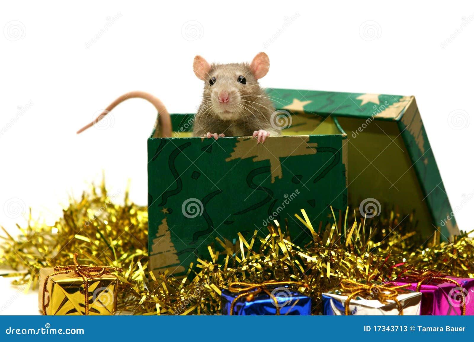 De rat van de baby met de decoratie van Kerstmis