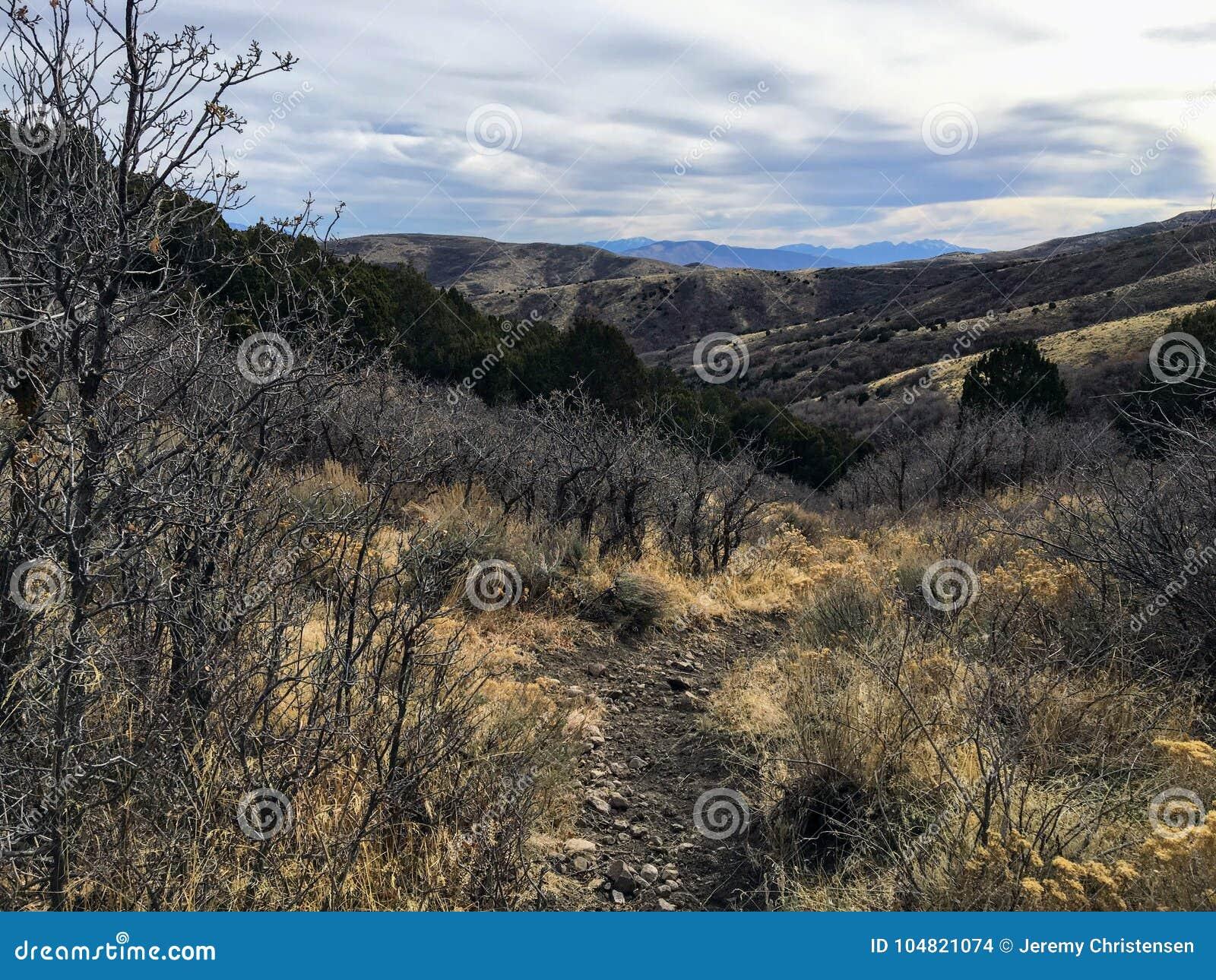 De recente bosmeningen die van het Dalingspanorama, horseback sleep door bomen op de Gele Vork en Rose Canyon Trails in Oquirr wa
