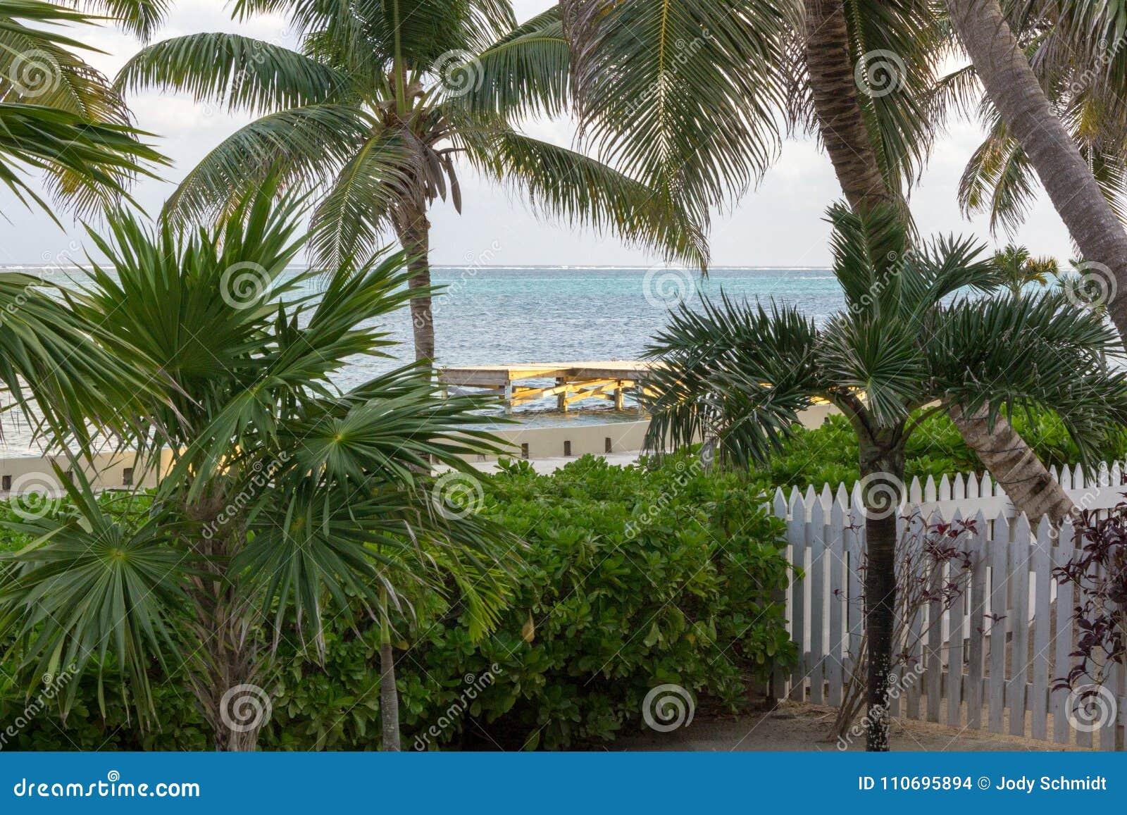 De recente dagzon giet een warme gloed over een dok in de afstand door de palmen