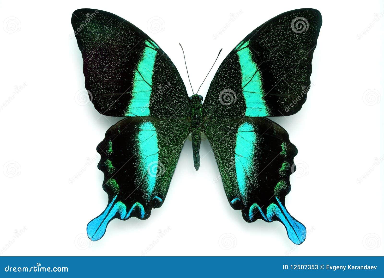 21 mooie kleurrijke vlinder - photo #35