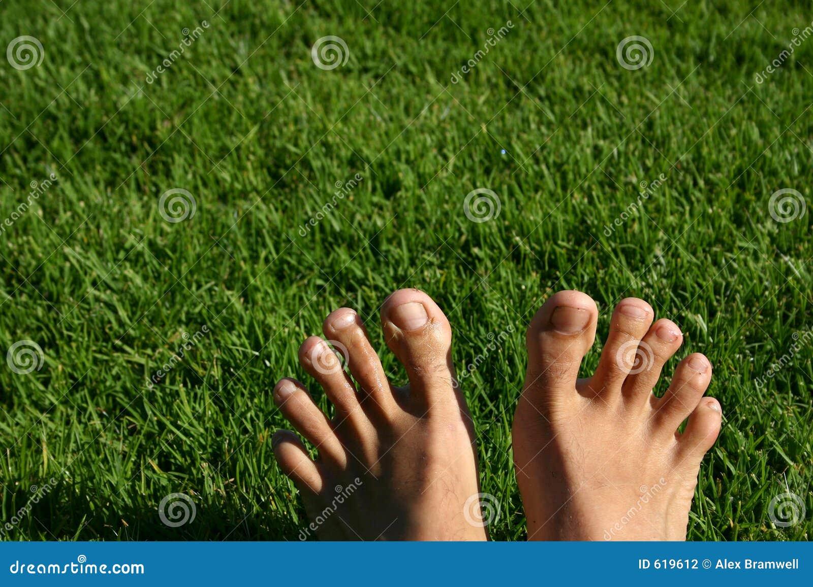 De Reeks van de Voeten van het gras