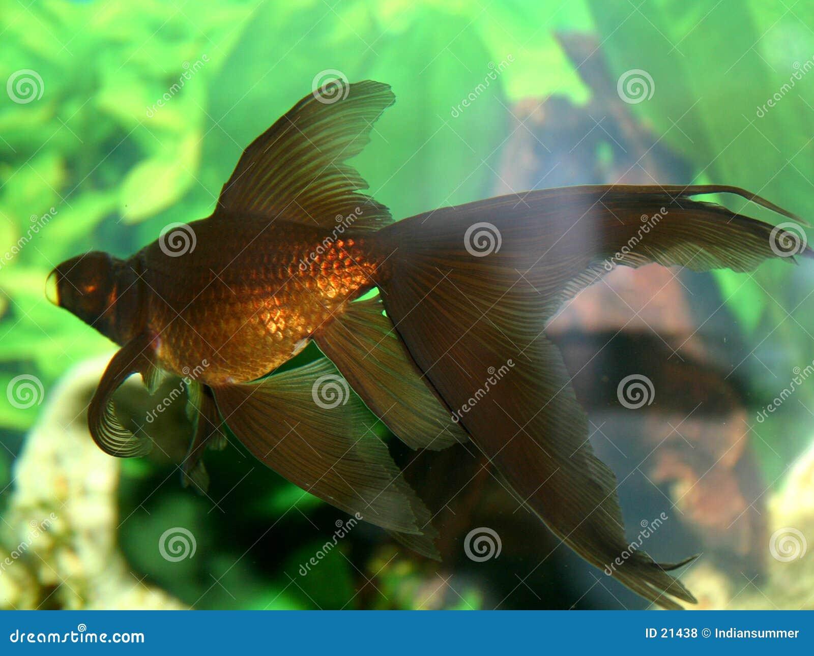 De reeks van vissen
