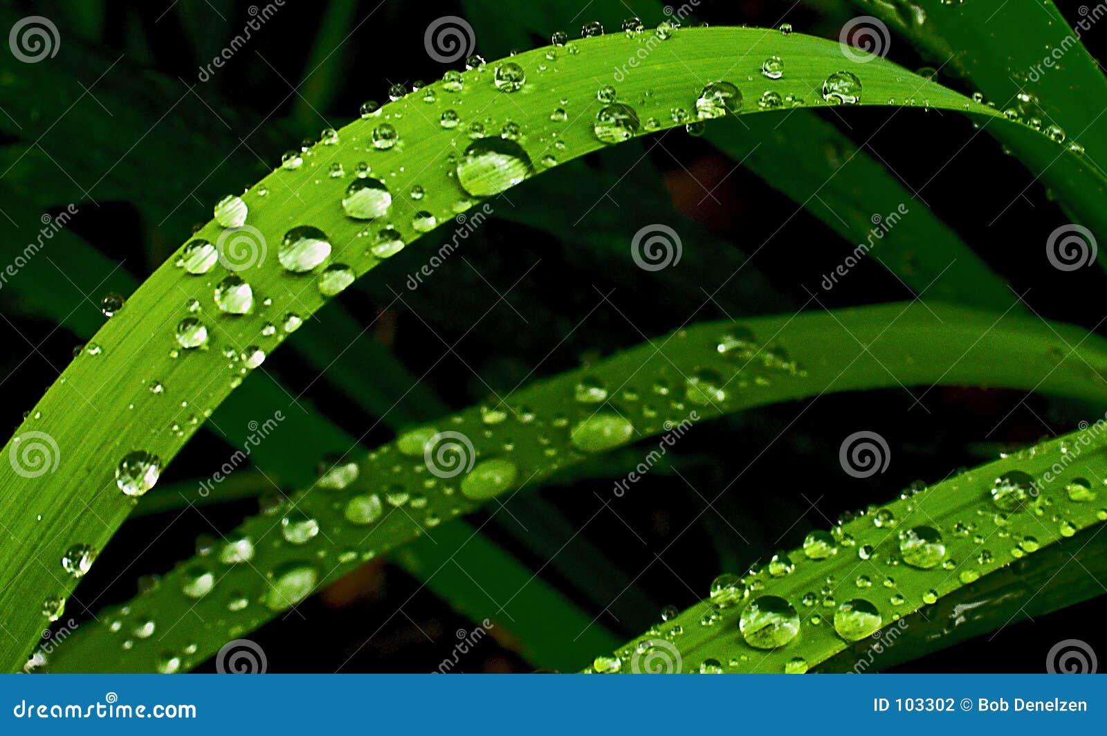 De regen van de zomer