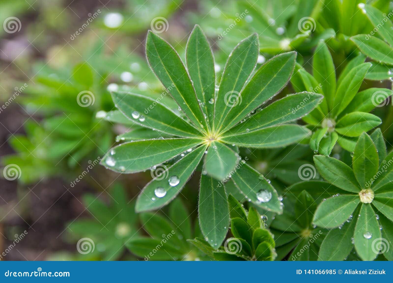 De regendalingen op groene bladeren, versheid is schoon
