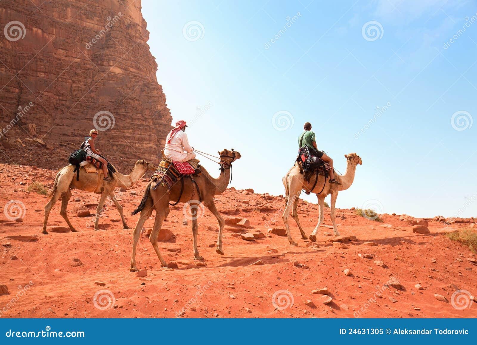 De reis van de kameel in de woestijn van de Rum van de Wadi, Jordanië