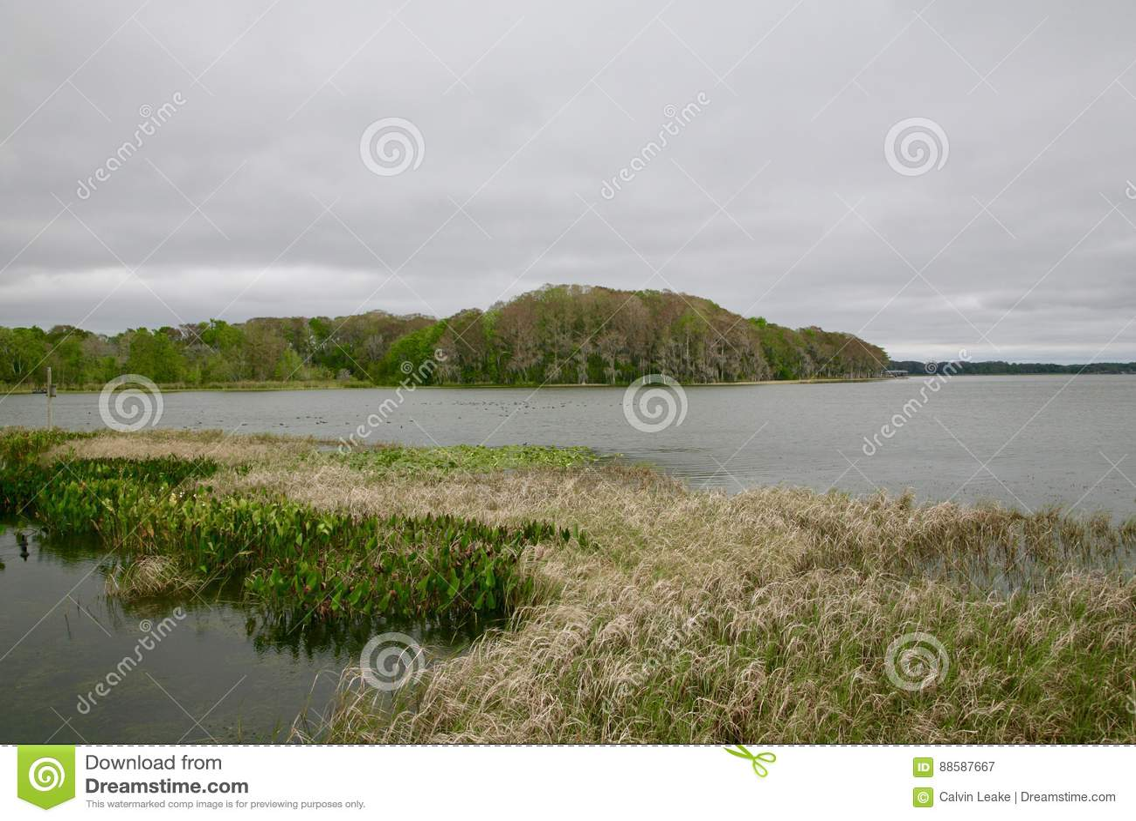 De Reserve van het moerasland