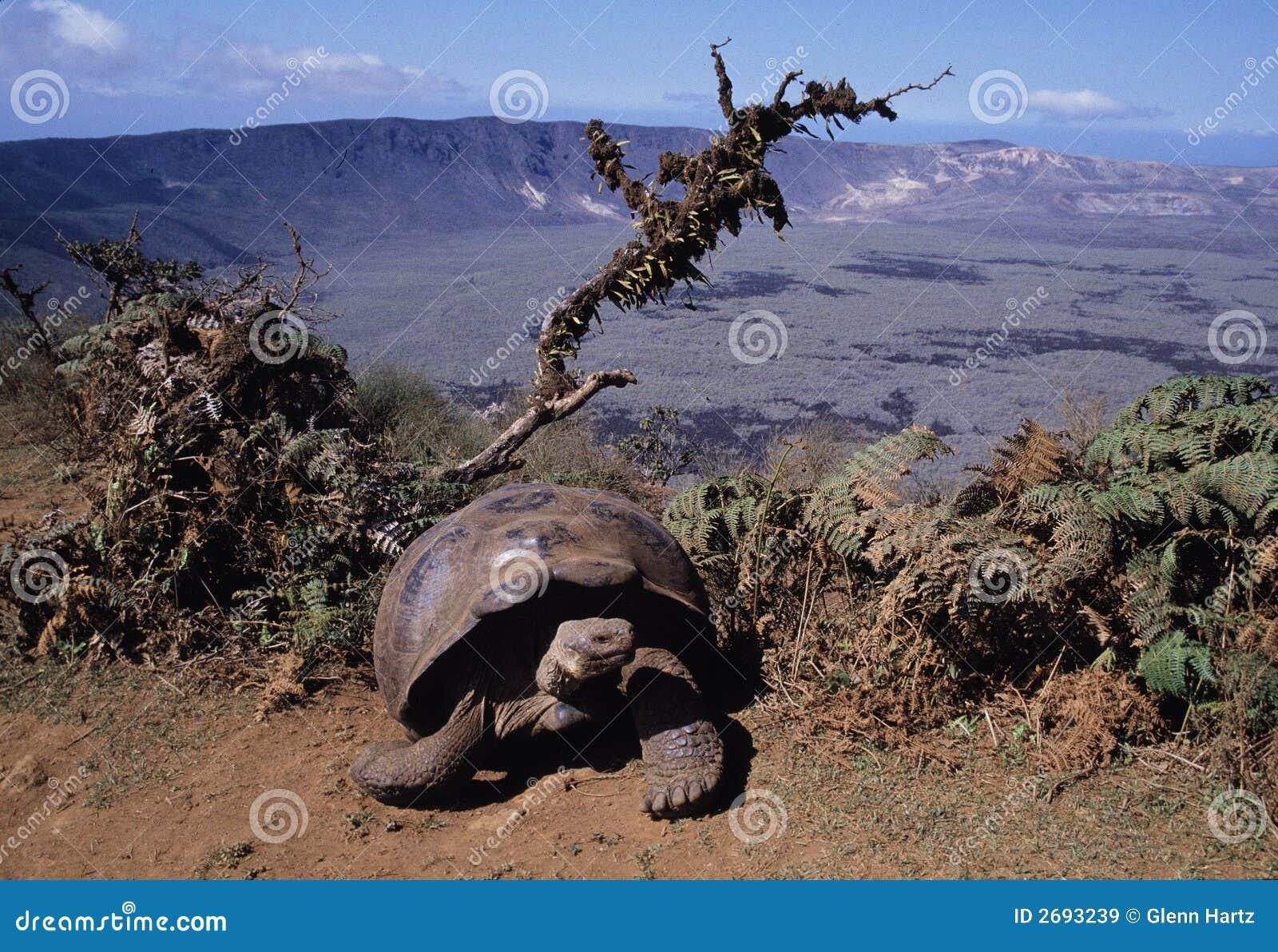 De reuze schildpad van de Galapagos