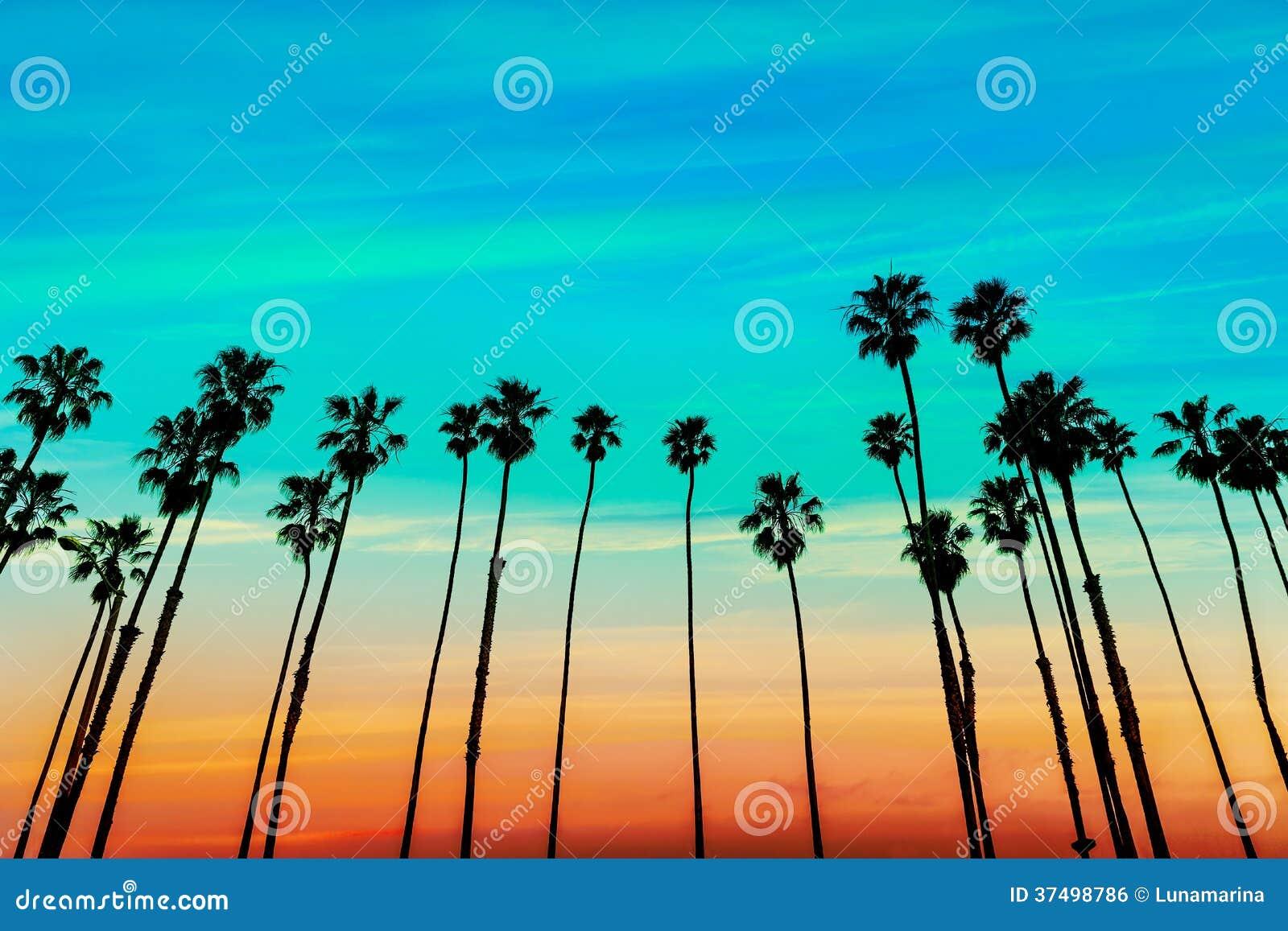 De rijen van de de zonsondergangpalm van Californië in Santa Barbara