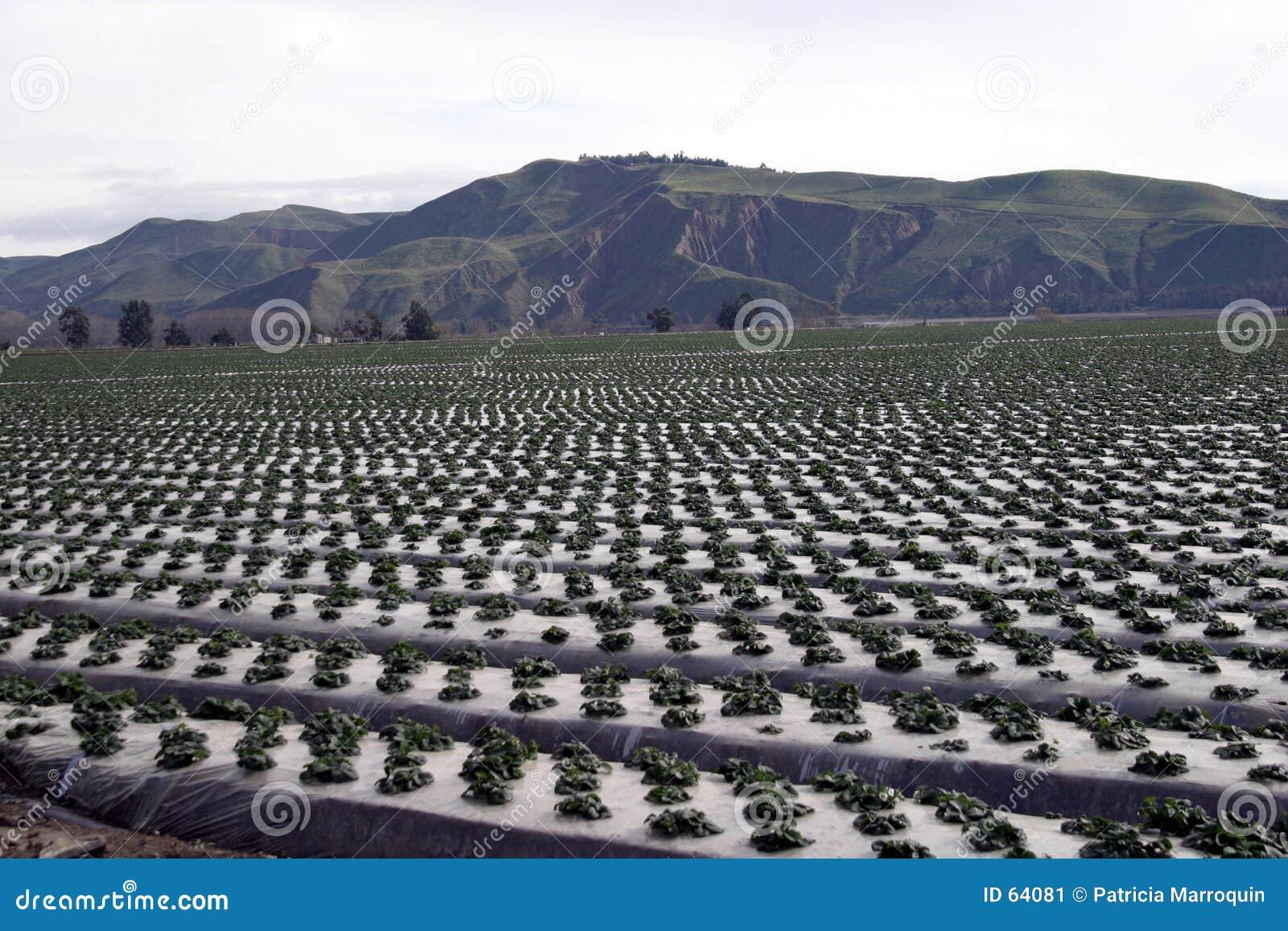 De Rijen van het landbouwbedrijf