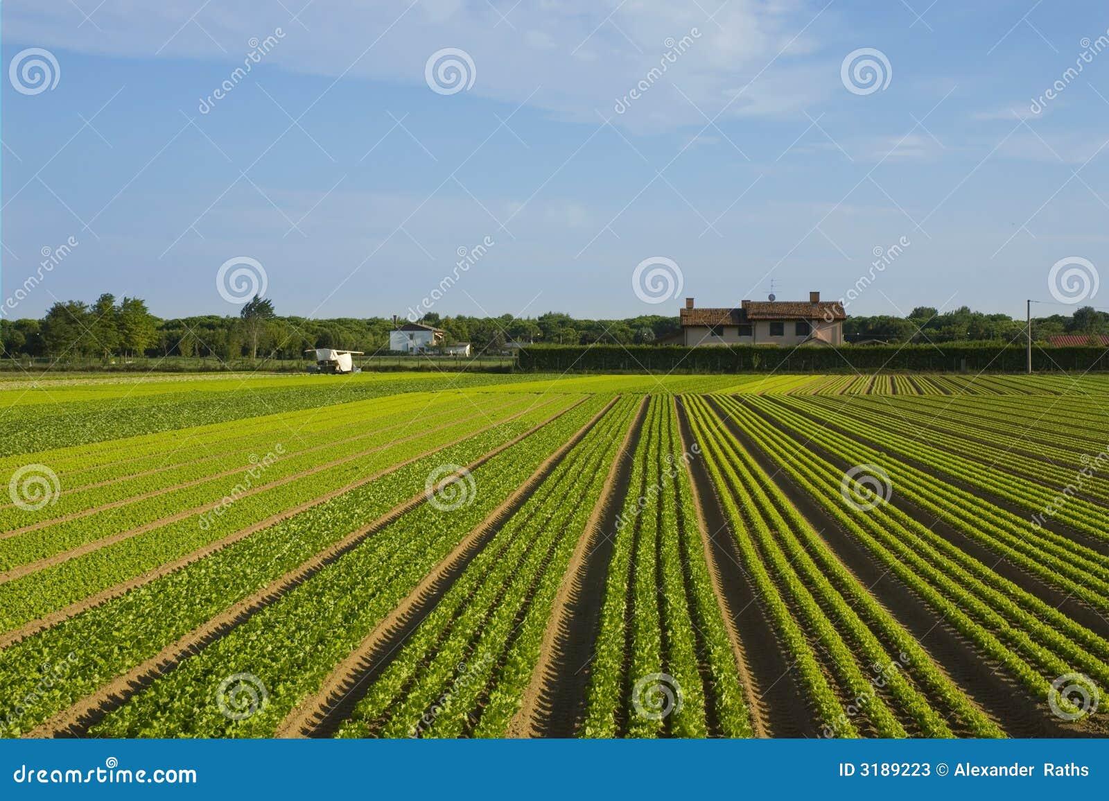 De rijen van het zaad