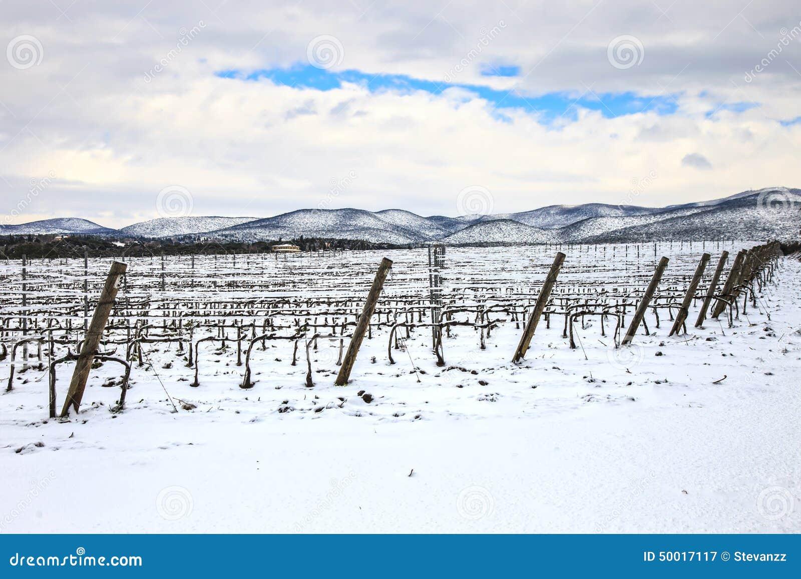 De rijen van wijngaarden door sneeuw in de winter worden behandeld die Chianti, Florence, Ita