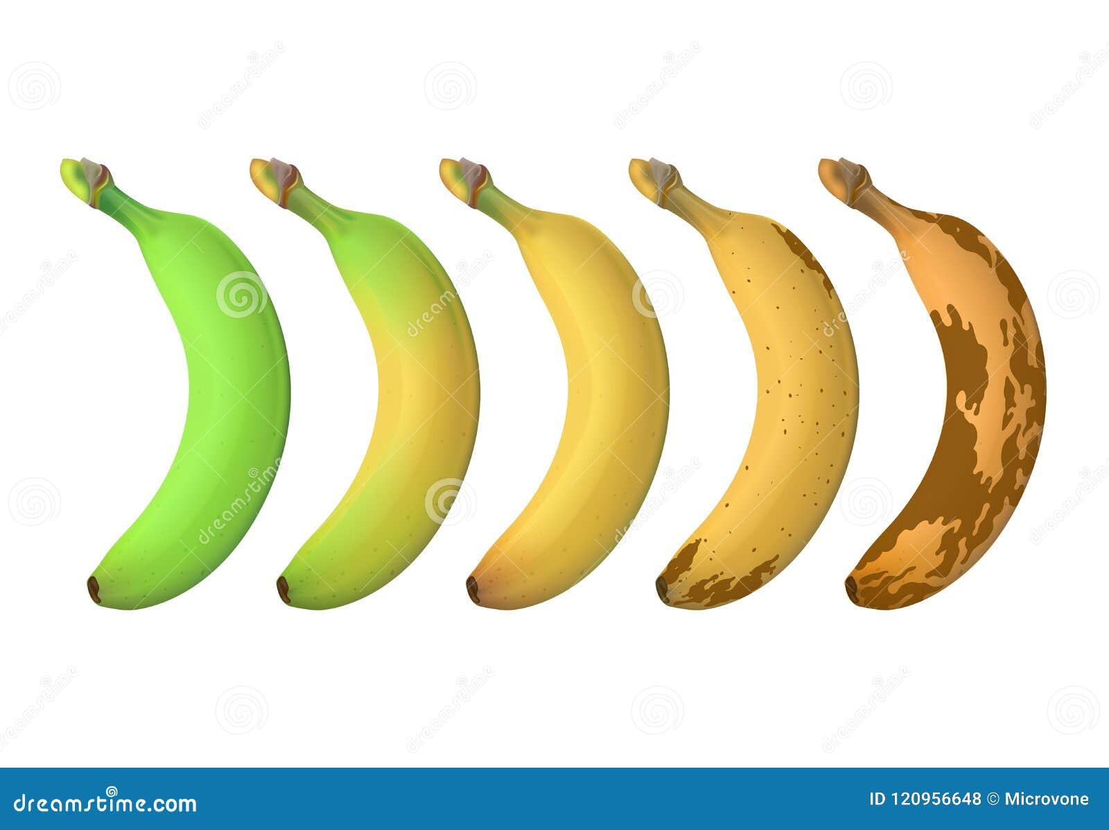 De rijpheidsniveaus van het banaanfruit van groene underripe aan bruine rot Vectordiereeks op witte achtergrond wordt geïsoleerd