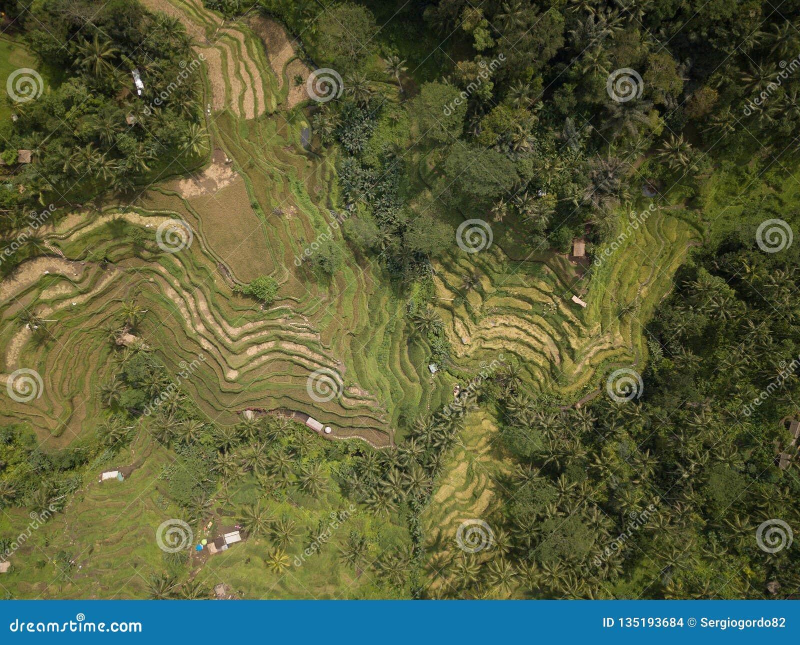 De rijst Bali, Indonesië van het satellietbeeldgebied