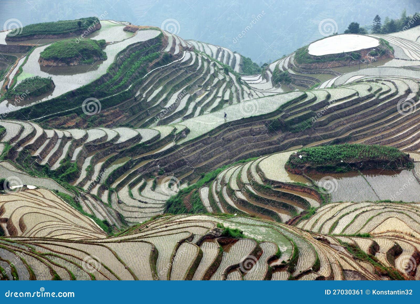 De rijstterrassen van Longji, China