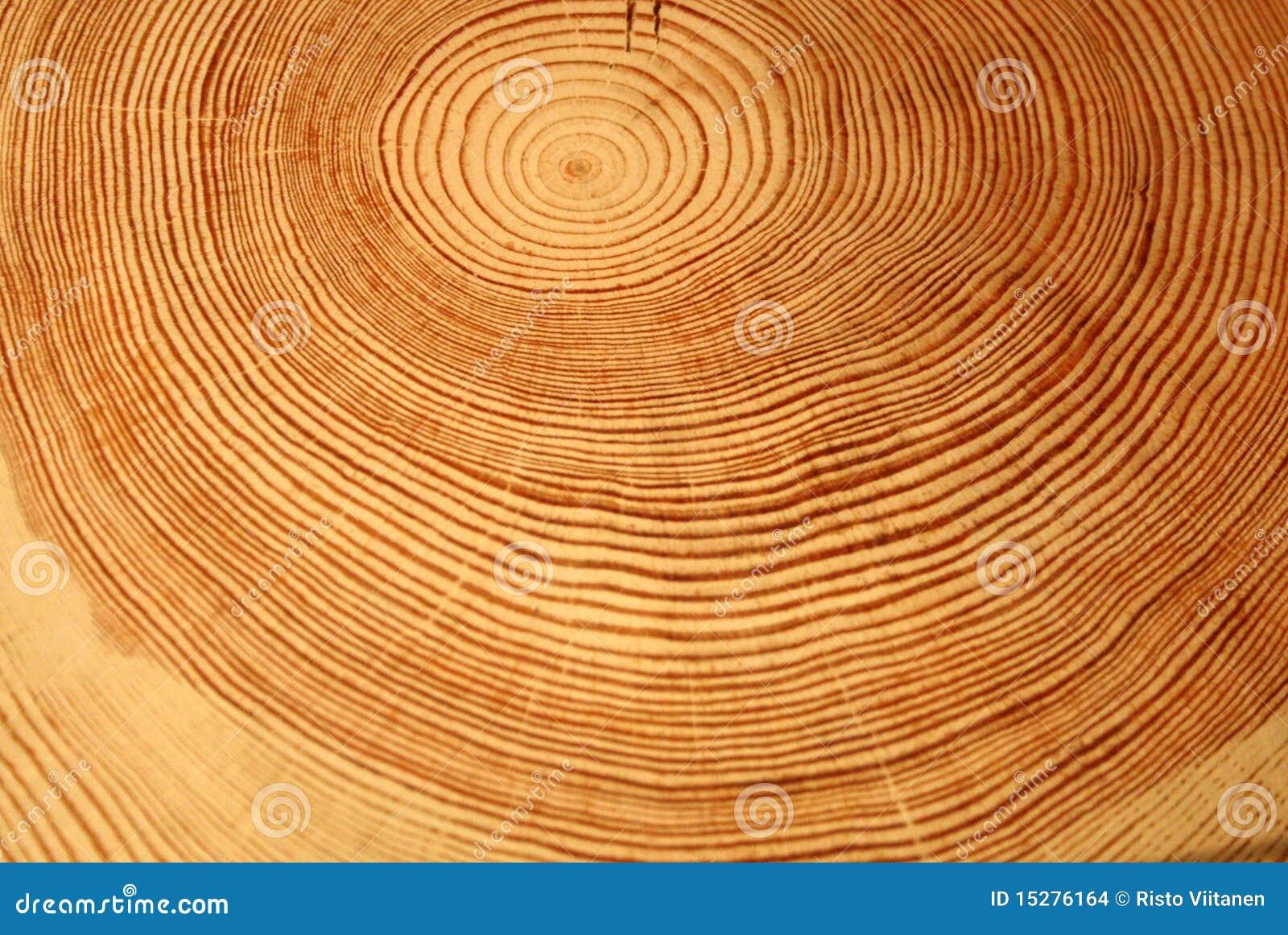 De ringen van het jaar van een boom