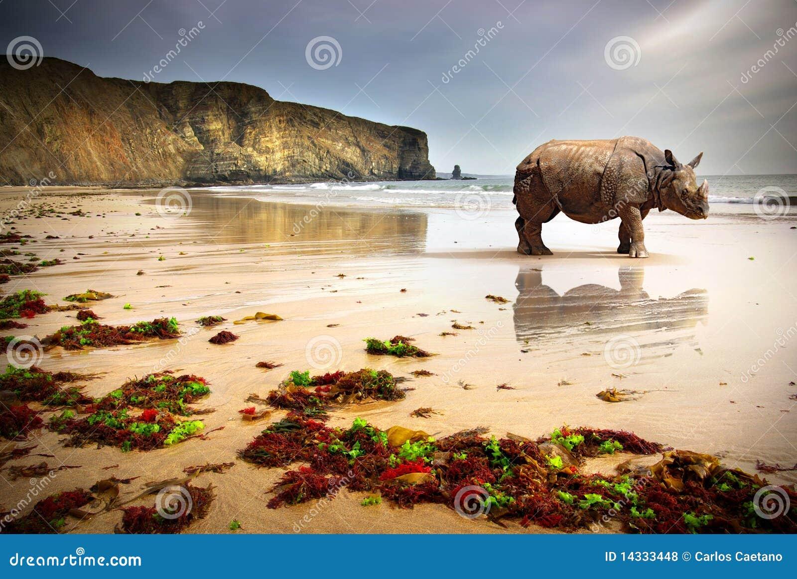 De Rinoceros van het strand