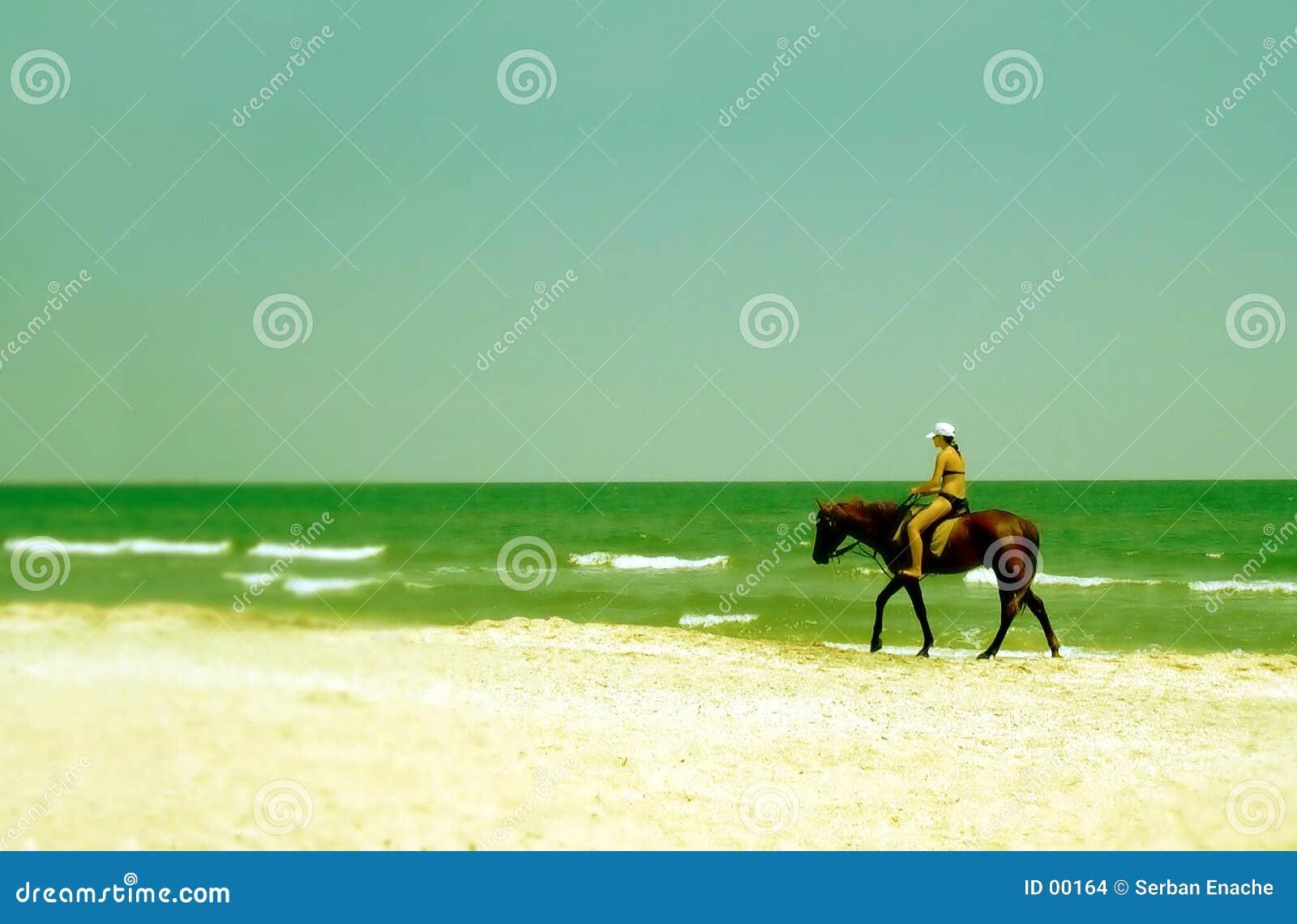 De rit van het strand