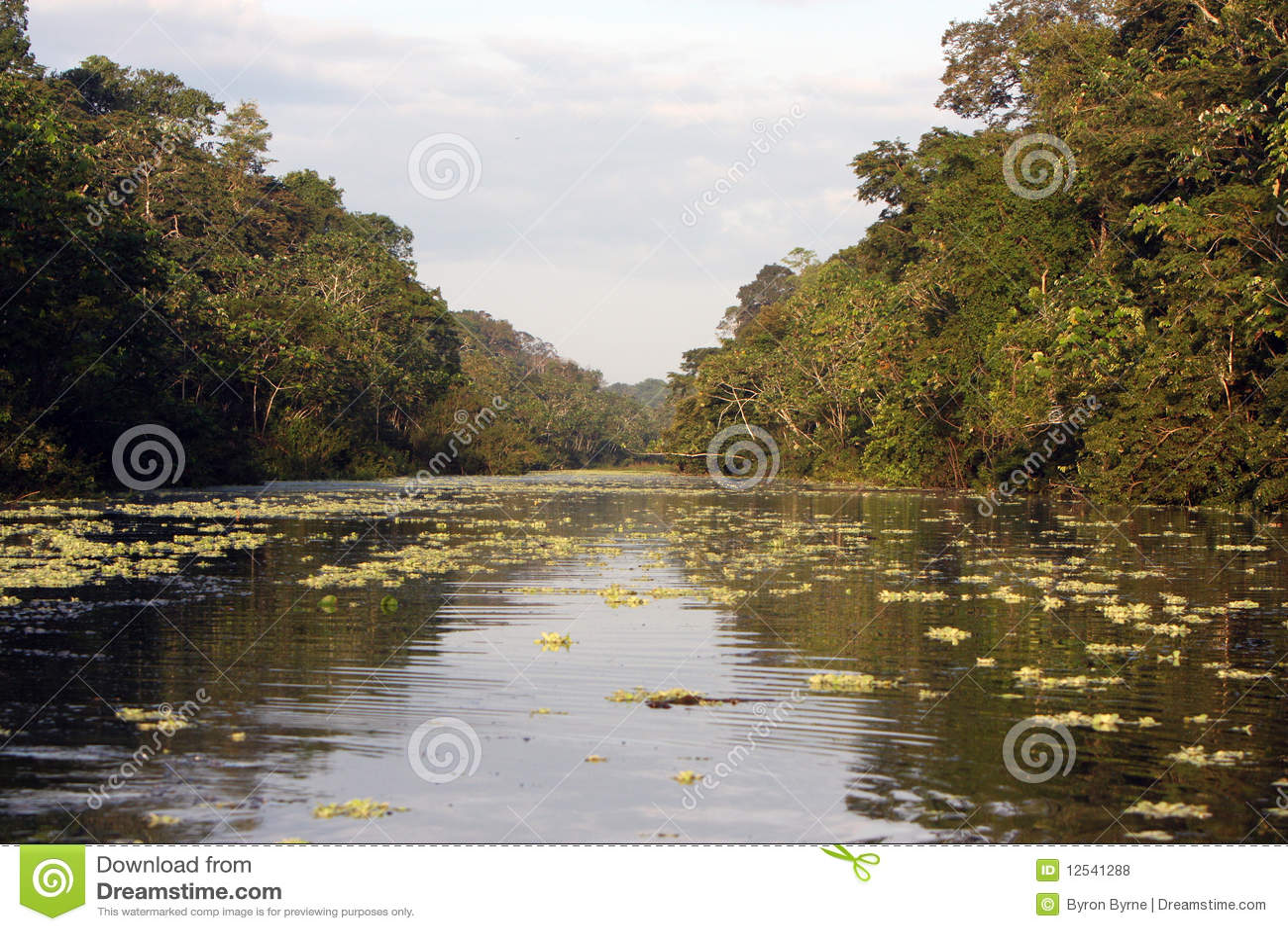 De rivier en de wildernis van Amazonië