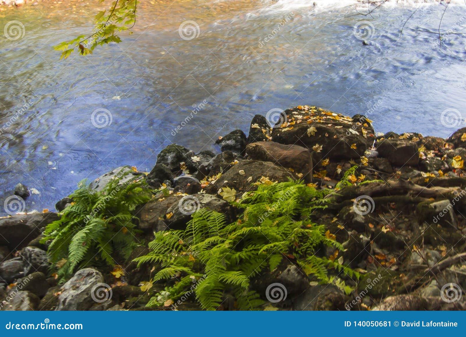 De Riviervarens van Merced van de Yosemitevallei