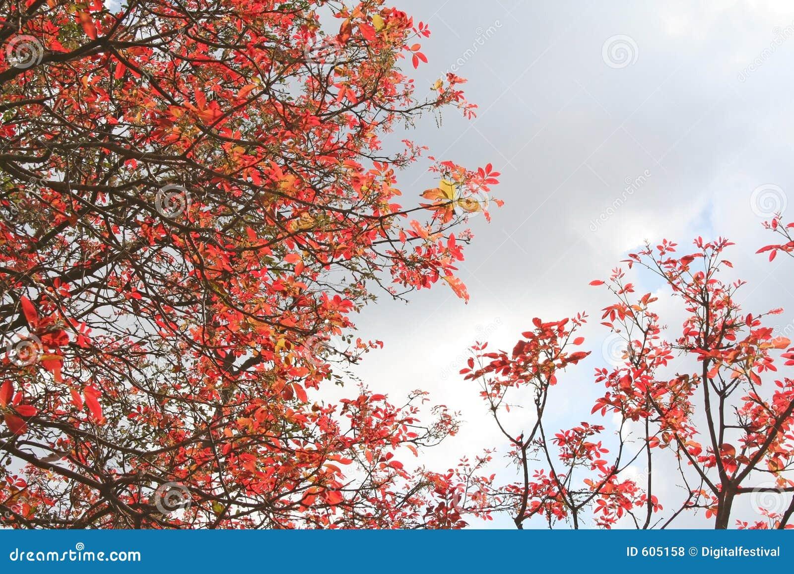 De rode bladeren India van de lente