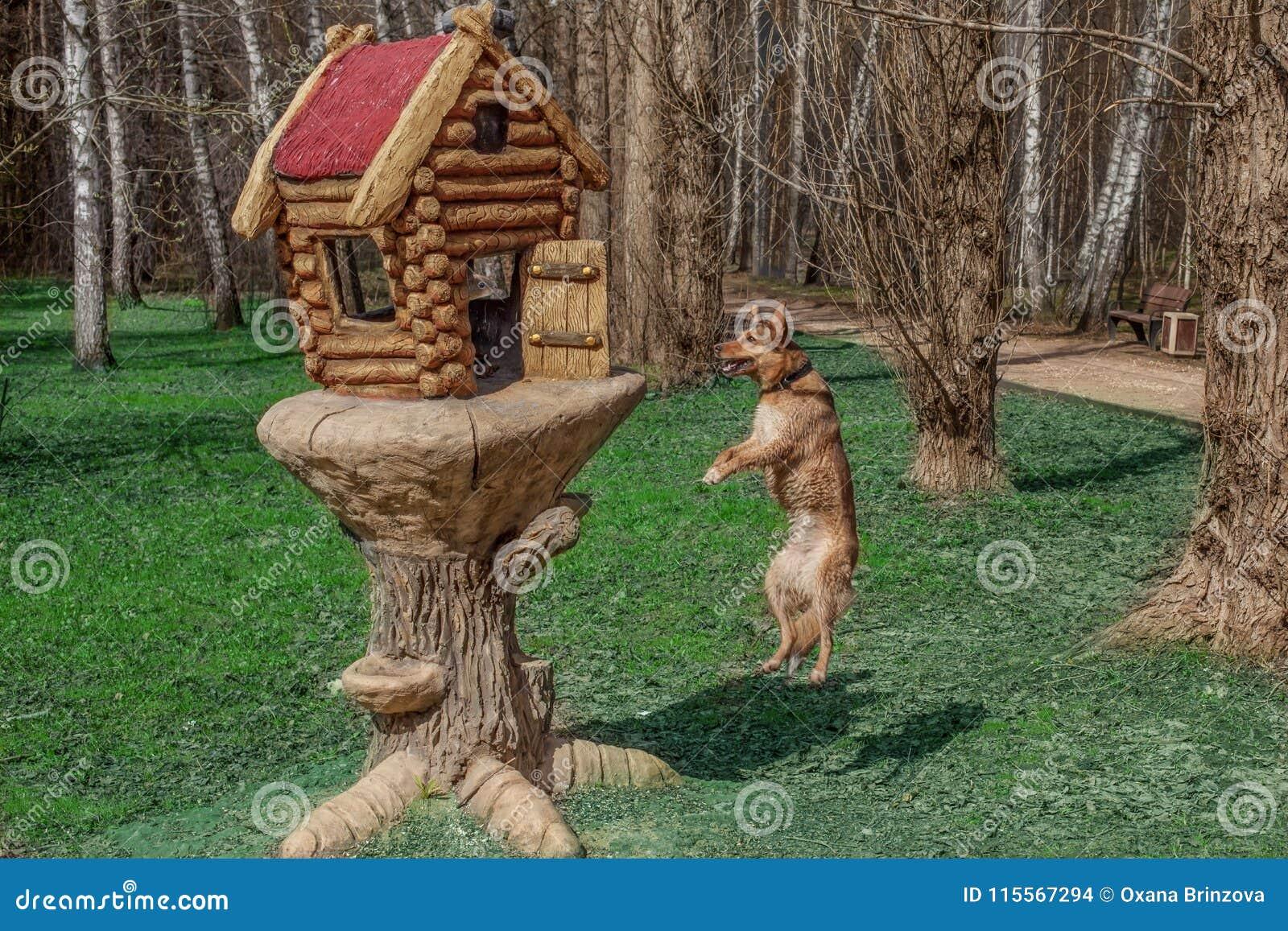 De rode hond zegt aan een scuirrel` Hey vriend! Luister, ben ik geen vos, l am een vogel Niet zeker? Kijk, kan ik vliegen Kan ik