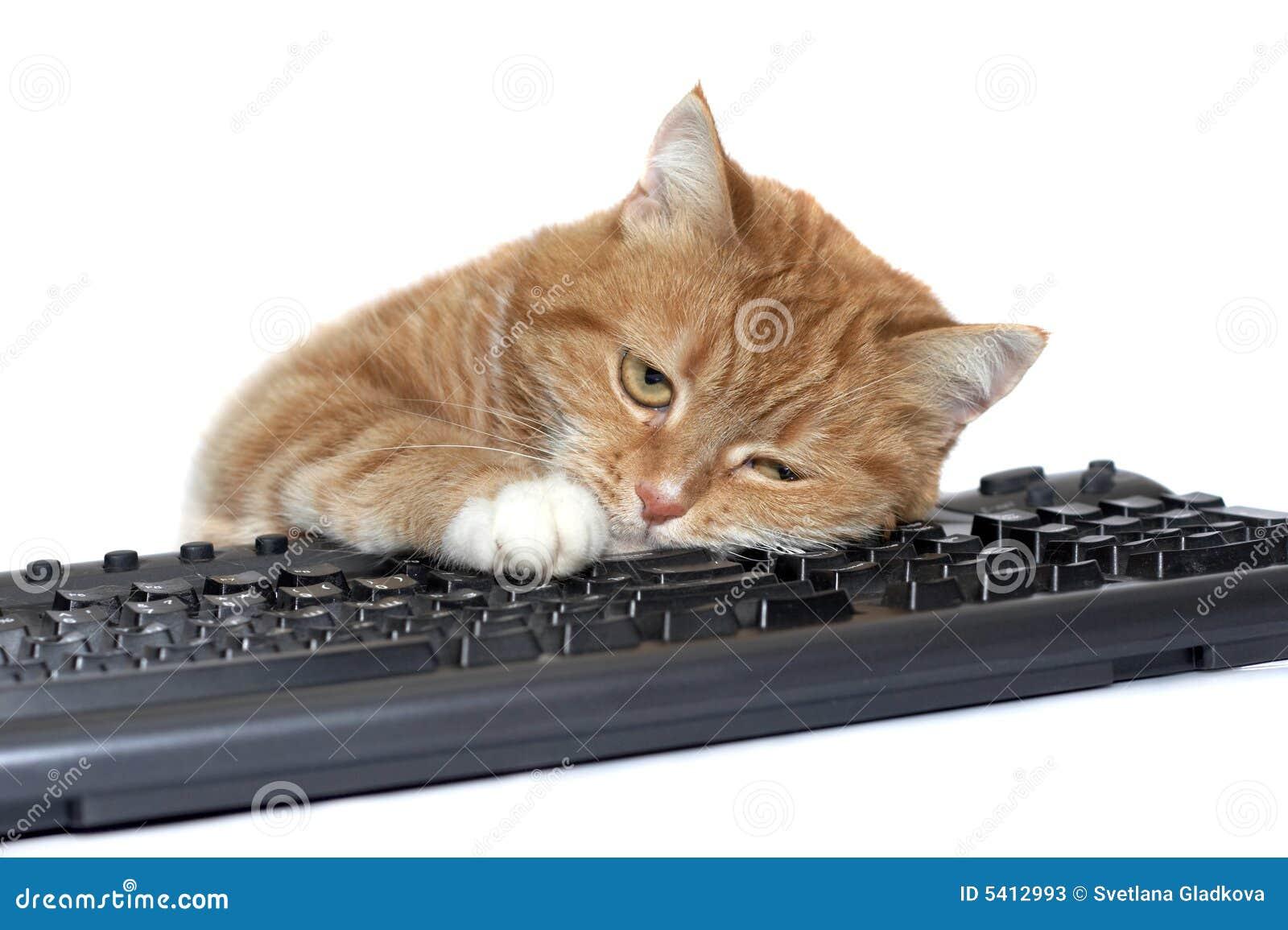 De rode kat legt op het toetsenbord