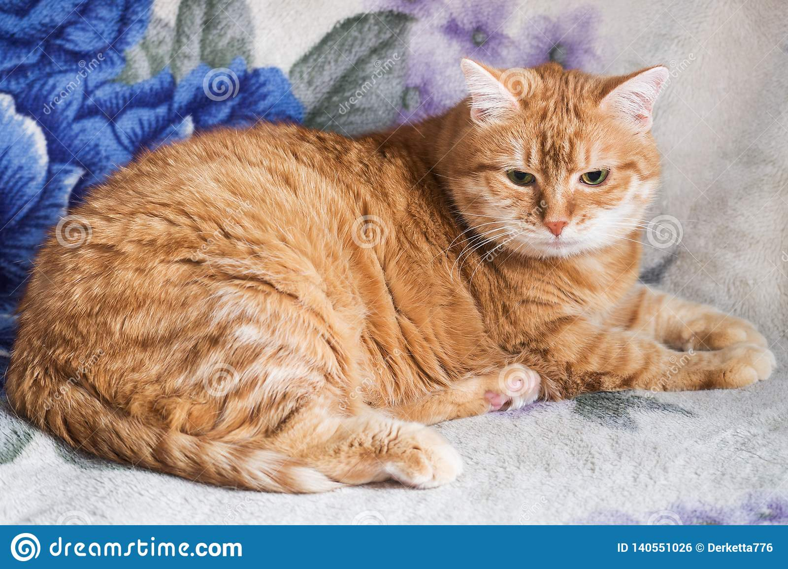 De rode kat rust op een deken