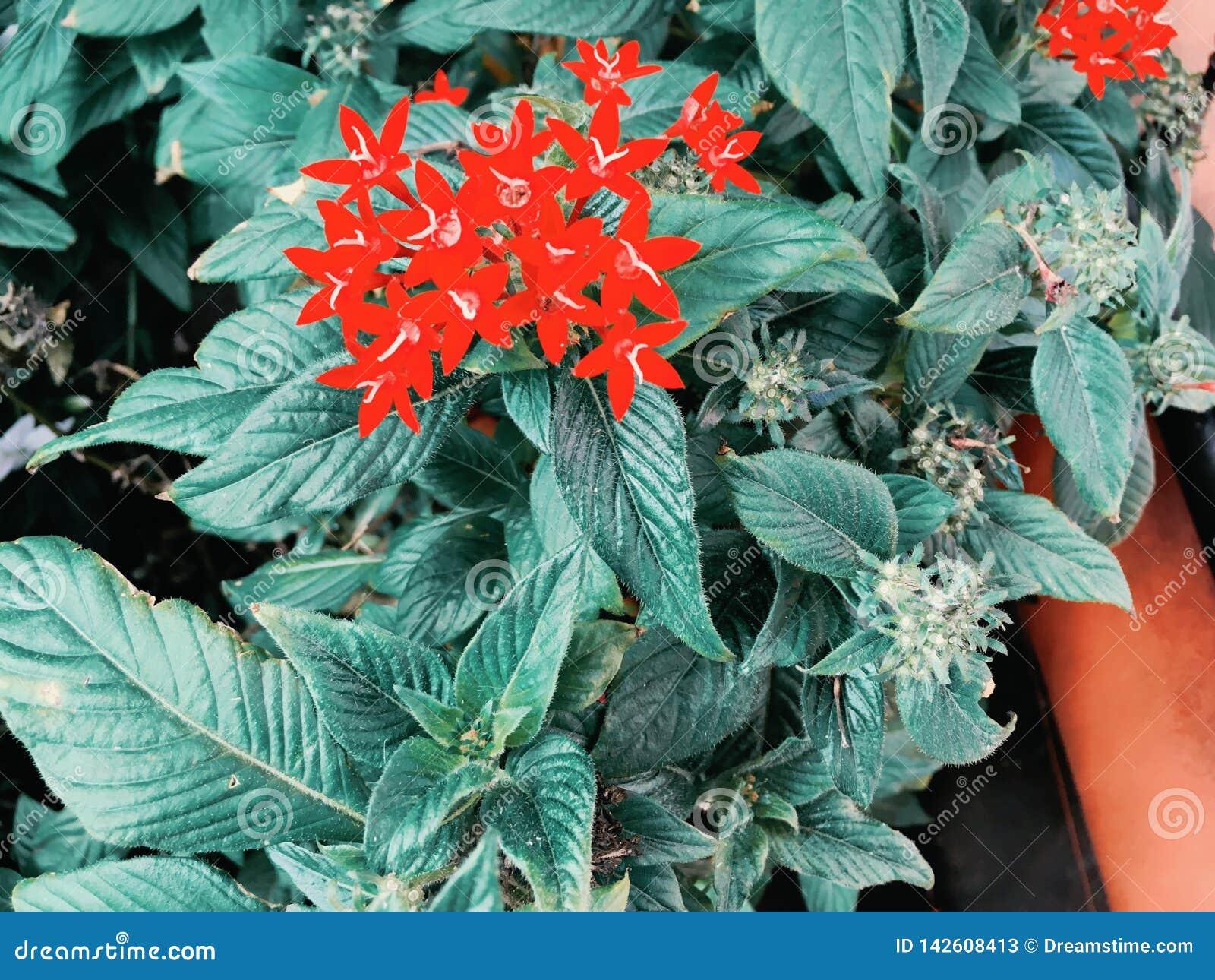 De rode wilde bloemen, de Bloemenbloei en de lente komen