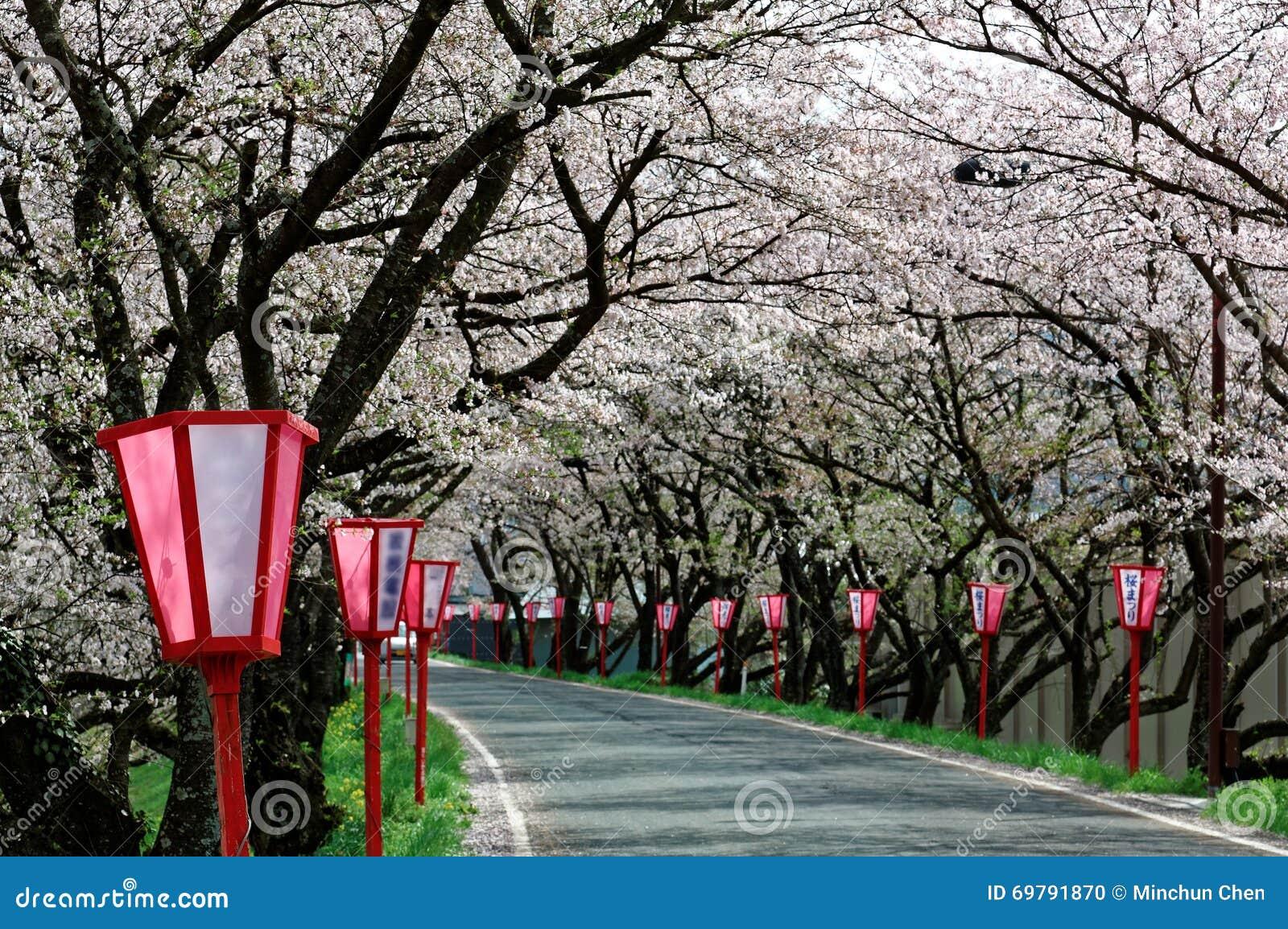 De romantische roze kersenboom (Sakura) komt en de Japanse posten van de stijllamp langs een landweg tot bloei (vage achtergrond