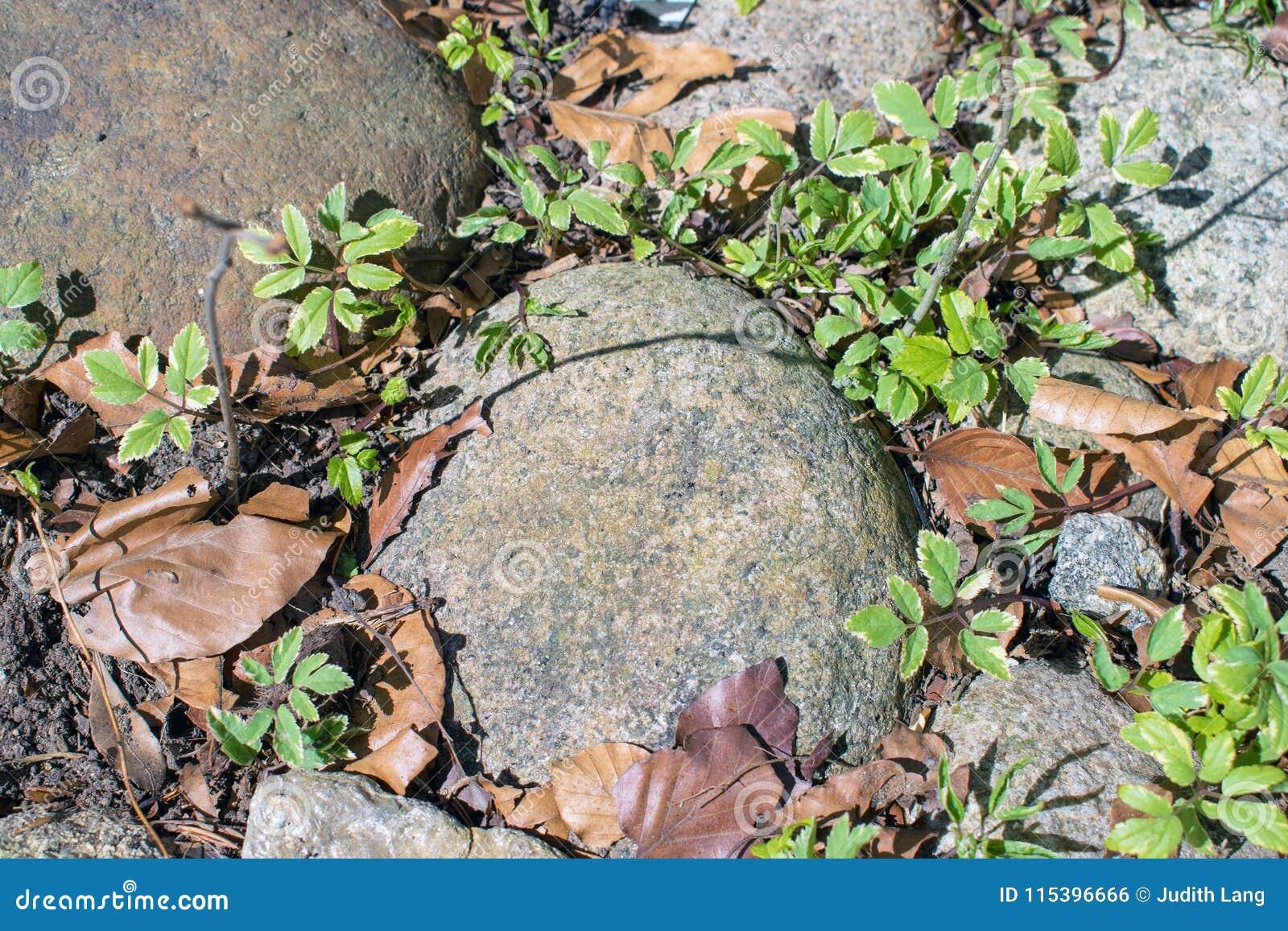 De rotsen, de installaties en de bladeren, de lente maken tijd schoon