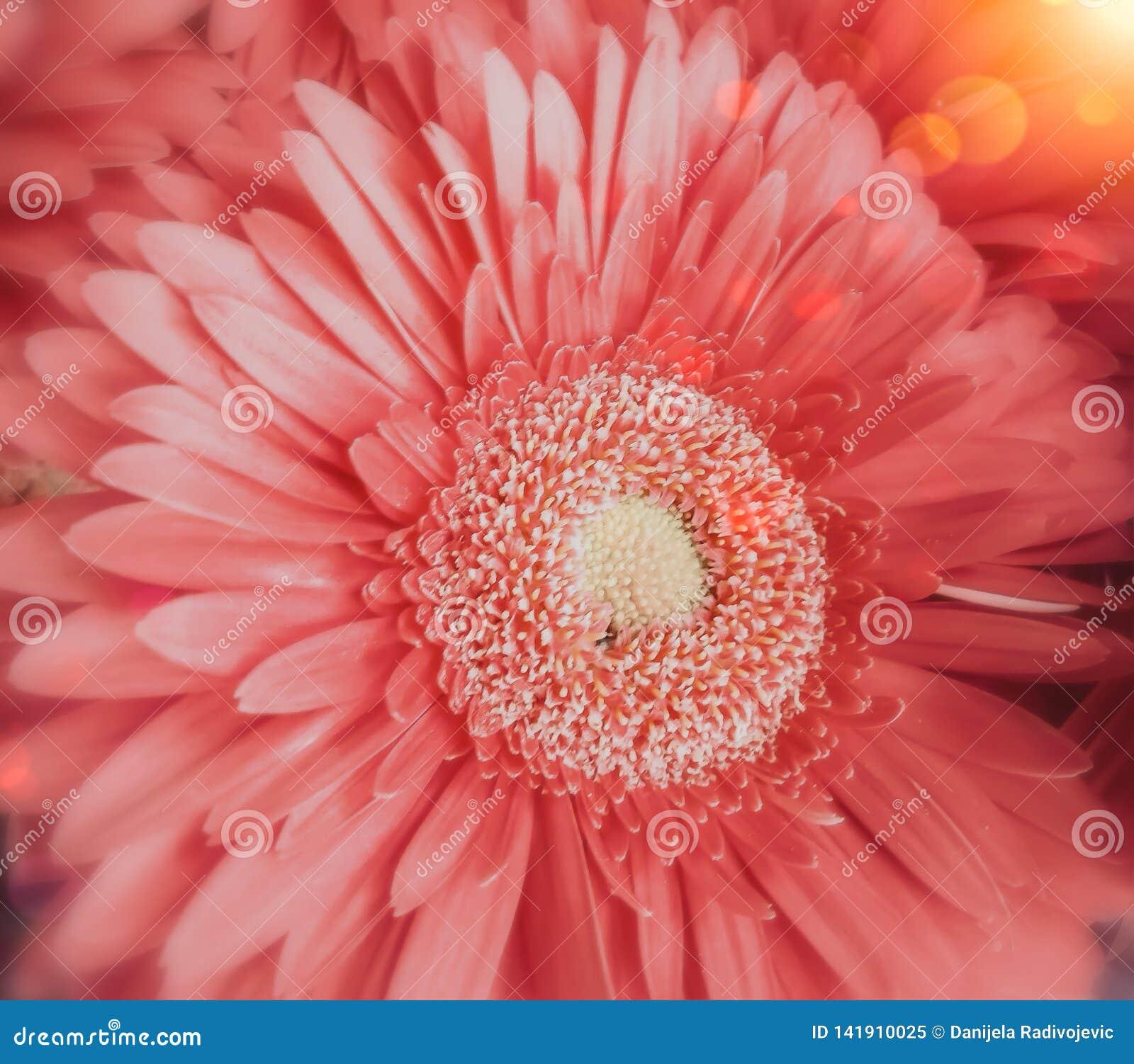 De roze bloem sluit mening