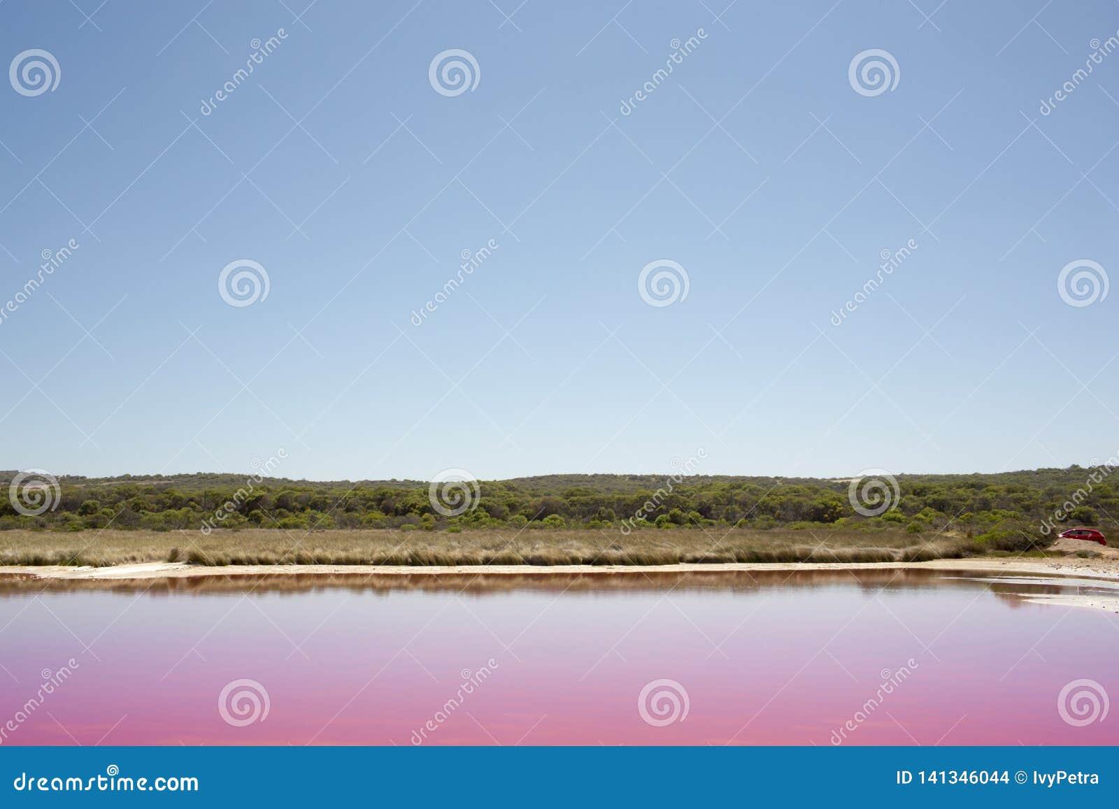 De roze Lagune van de meerhut bij Haven Gregory, Westelijk Australië, Australië