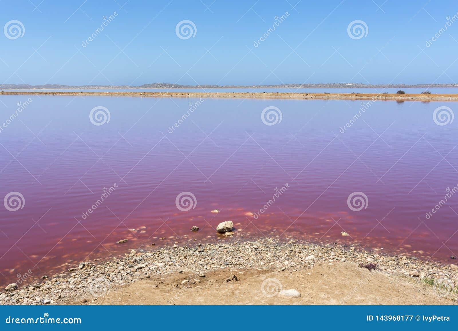 De roze Lagune van de meerhut bij Haven Gregory, Westelijk Australi?, Australi?