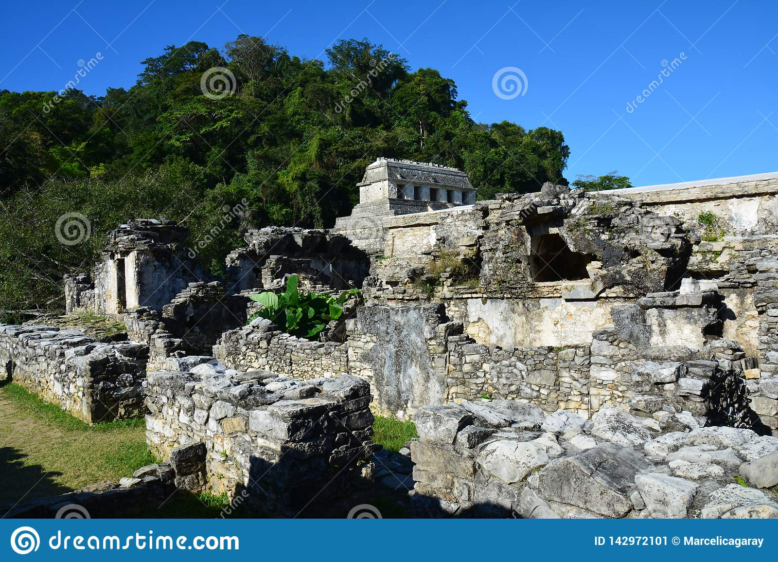 De Ruïnes Chiapas Mexico van Weergevenpalenque