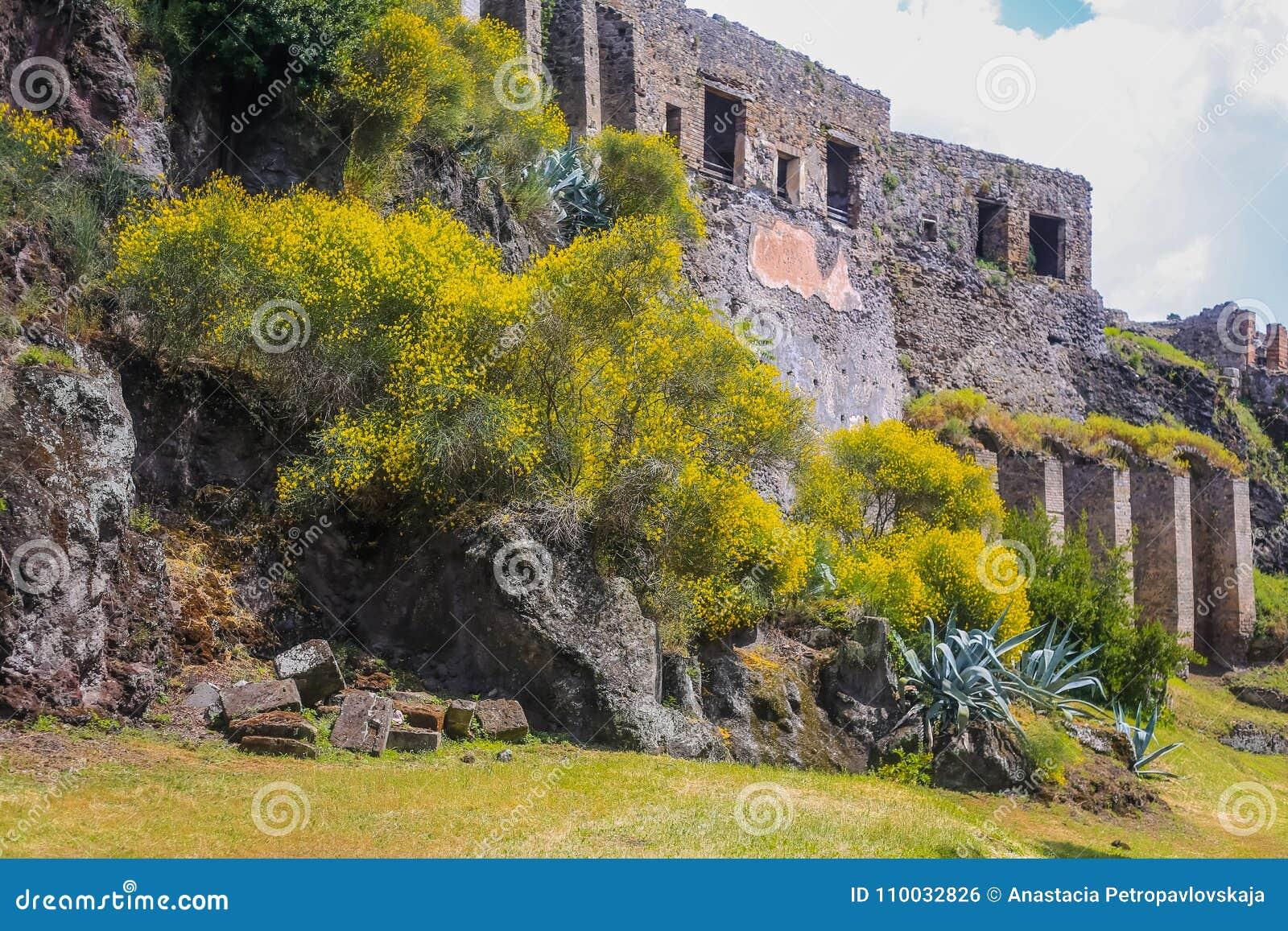 De ruïnes van Pompei - de lentetijd, bloeiende struiken