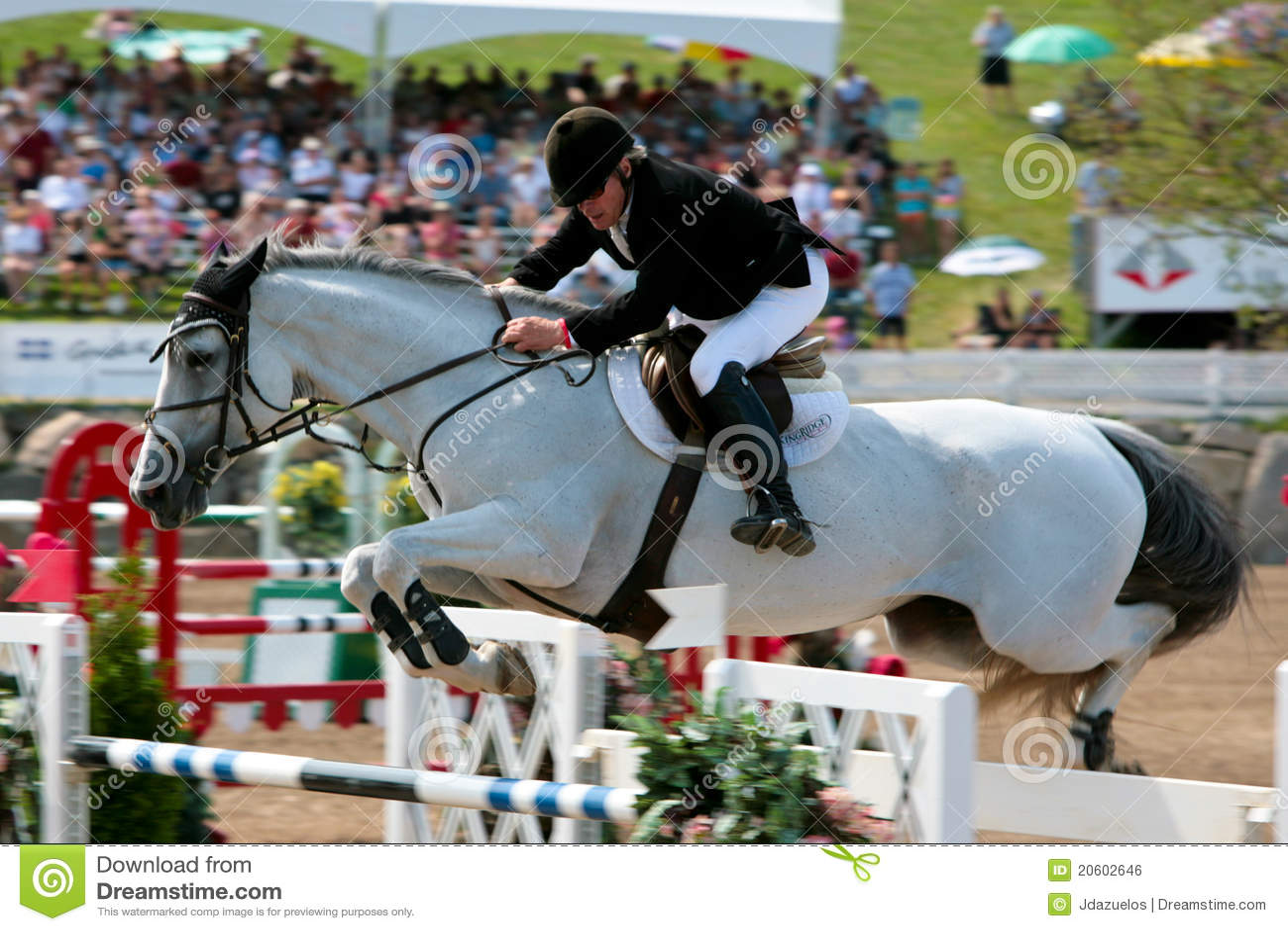 De Ruiter Van Het Paard Bij De Springende Concurrentie ...
