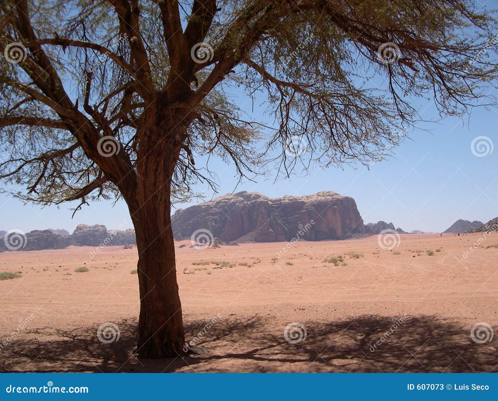 De rumwoestijn iv. van Wadi