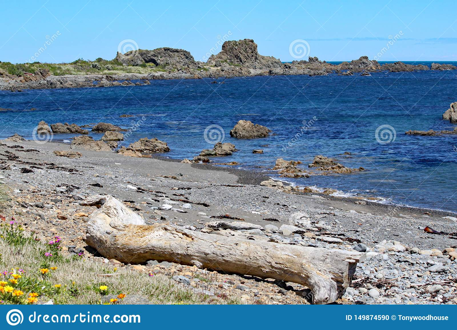De ruwe rotsen steken uit in het kalme overzees uit bij een verlaten strand op de Kok Strait dichtbij Wellington, Nieuw Zeeland
