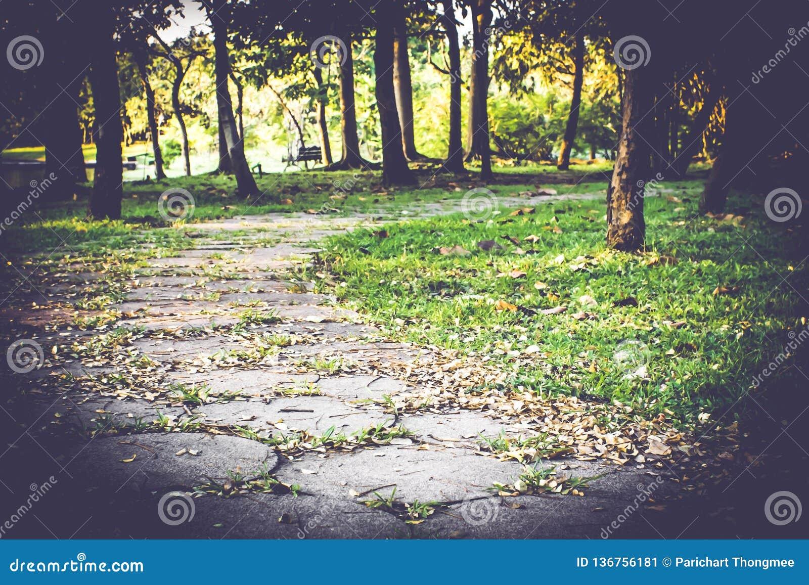 De S-curve van de gangweg in openbaar park met de gevallen achtergrond van de bladeren mooie aard